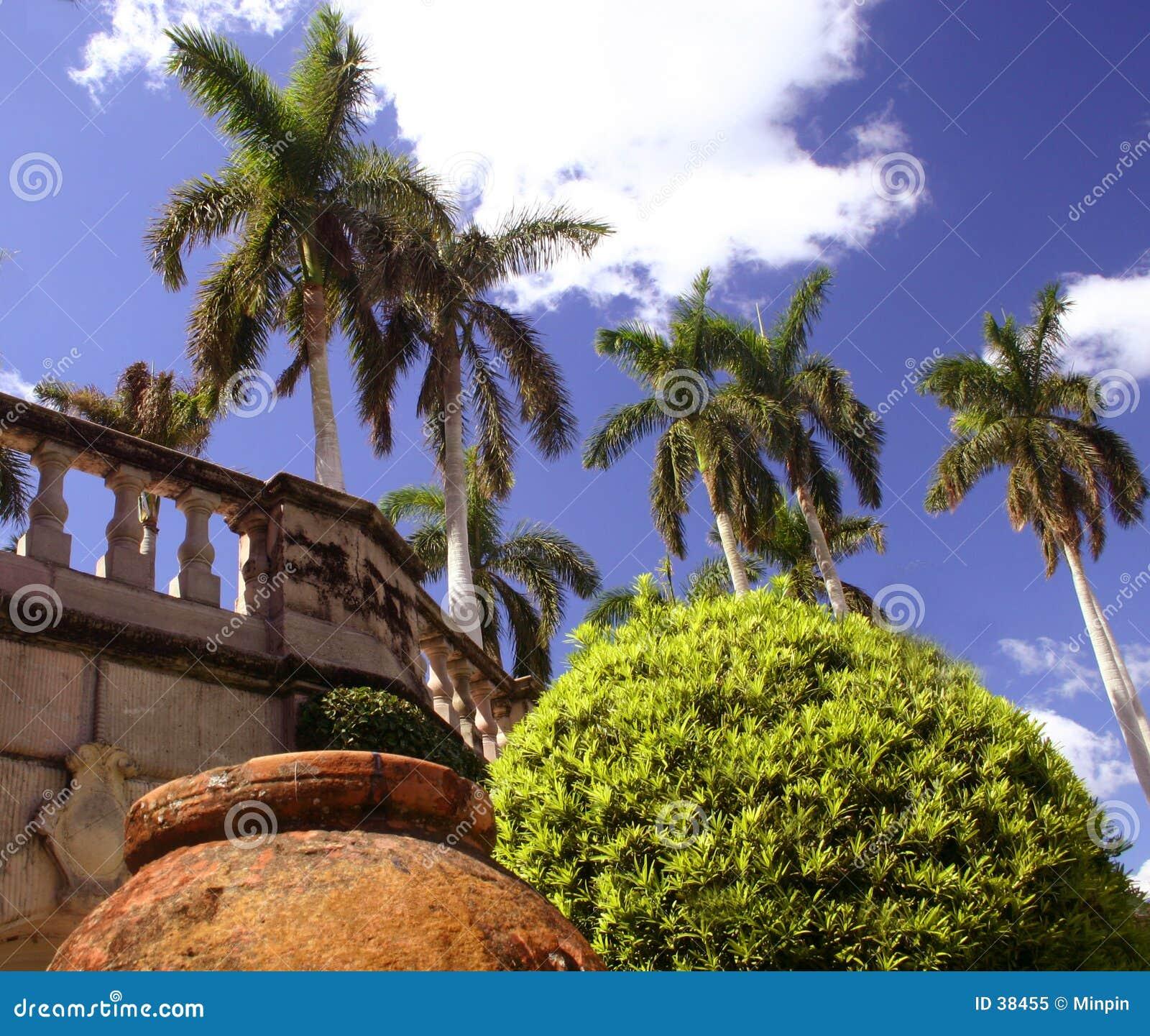 Potenciômetro, árvore e palmas