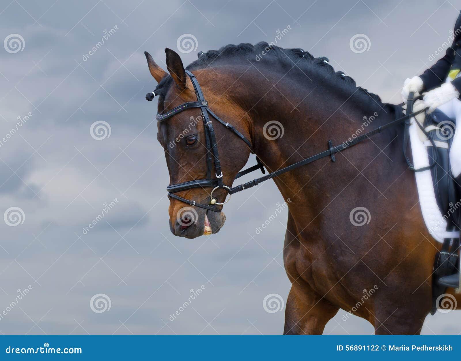 Potere di cavallo