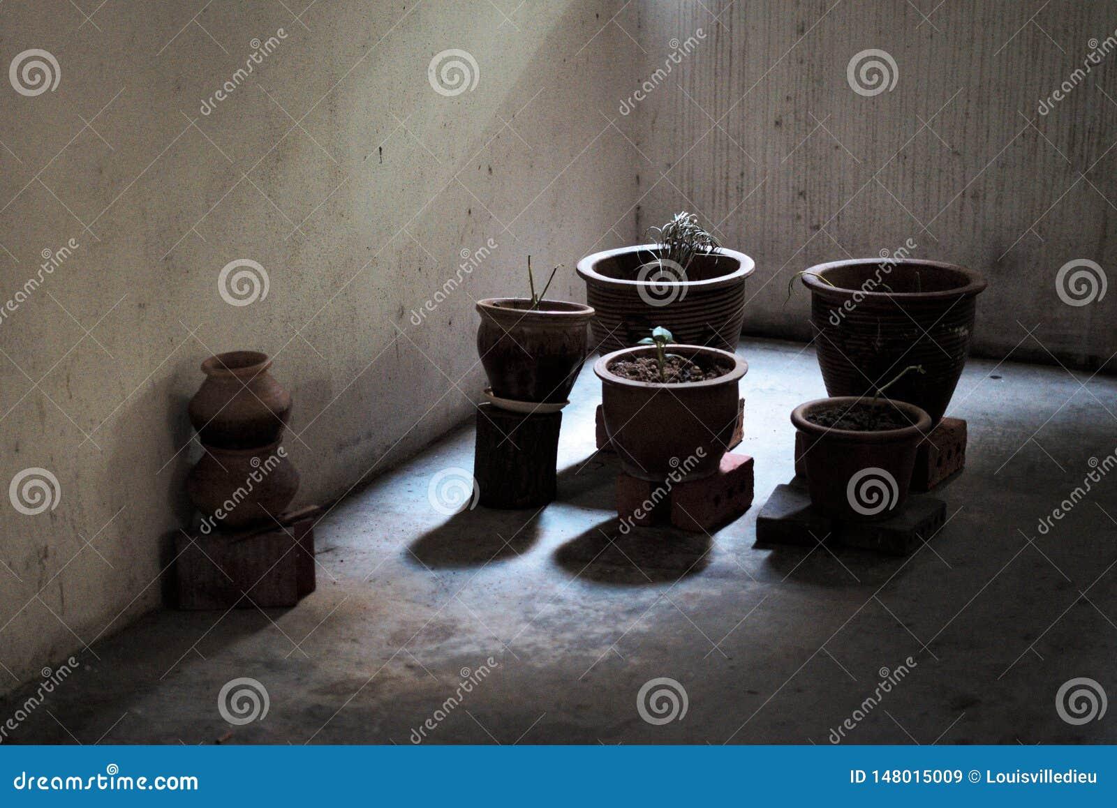 Potes de la planta en ladrillos en sombras oscuras en un pasillo complejo manchado