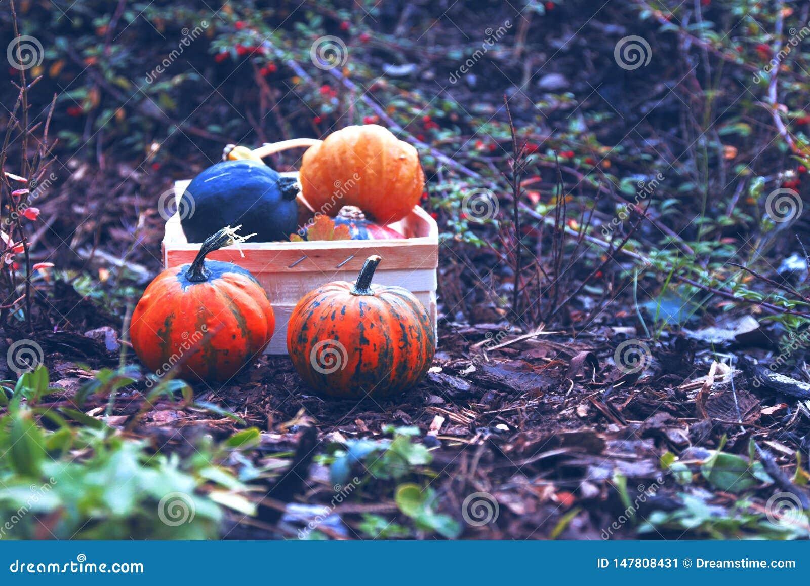 Potiron, automne, Halloween, orange, chute, r?colte, l?gume, potirons, thanksgiving, ferme, nourriture, correction de potiron, sa