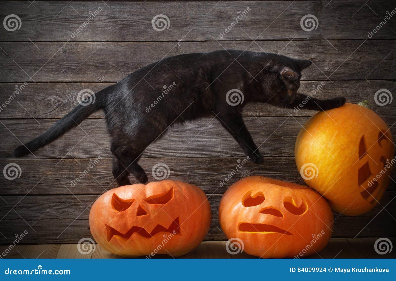 Potiron de Veille de la toussaint et chat noir