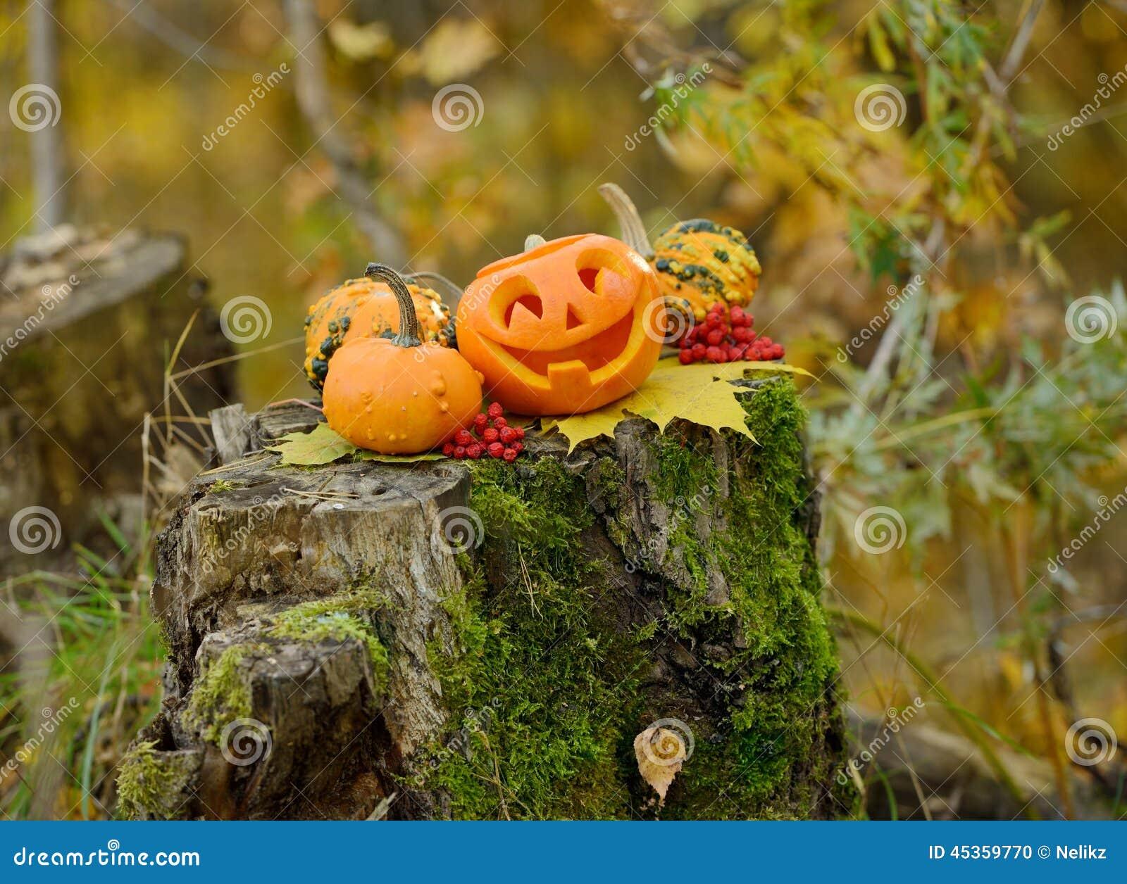 Potiron effrayant de Veille de la toussaint dans la forêt d automne