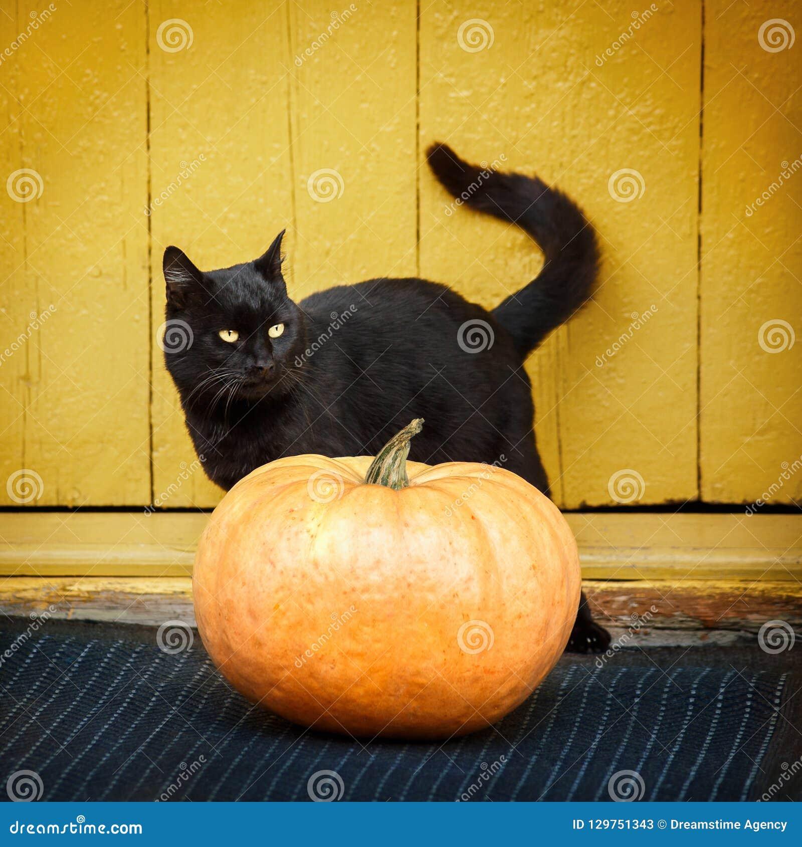 Potiron et chat noir