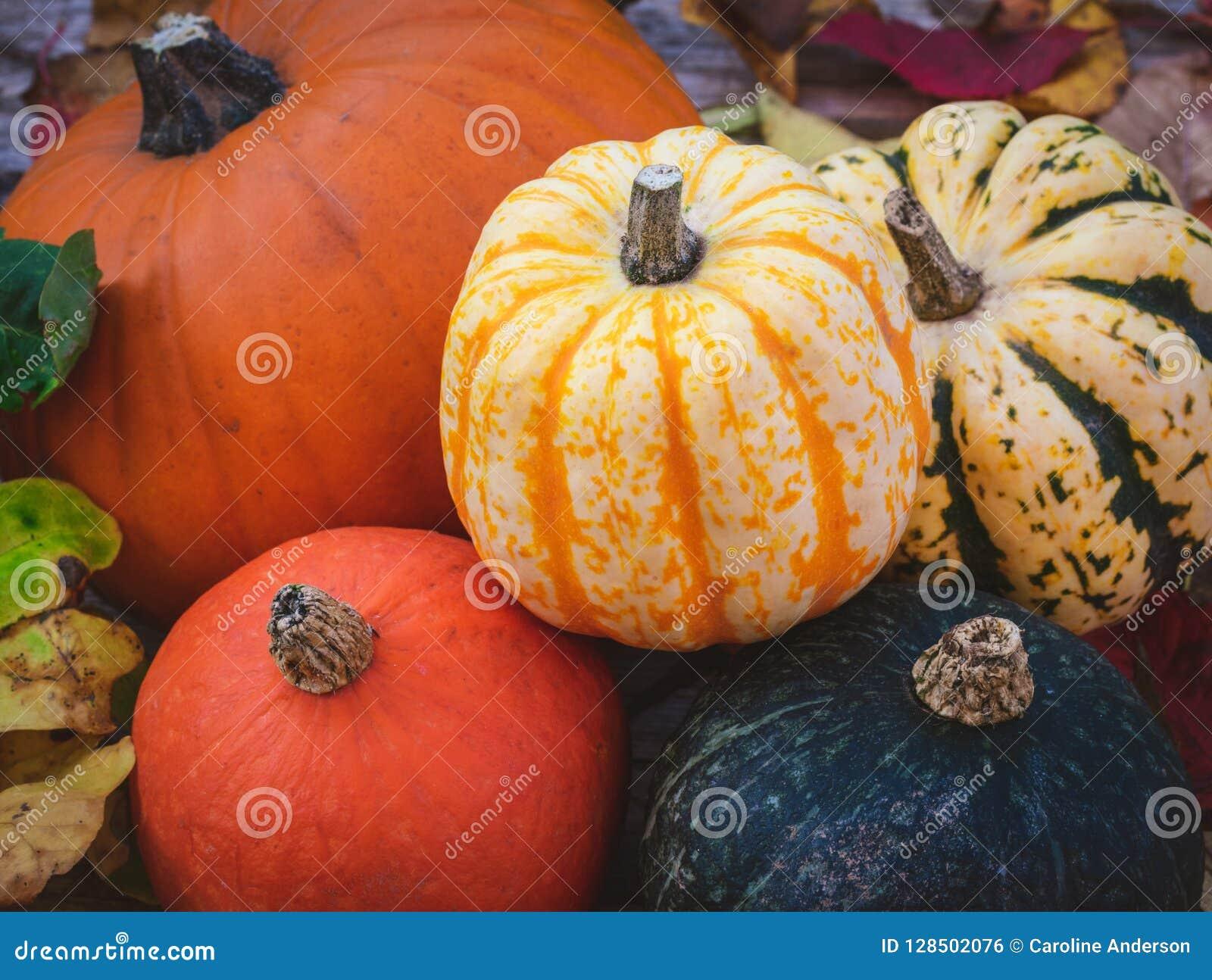 Potiron et courges, une sélection colorée d automne