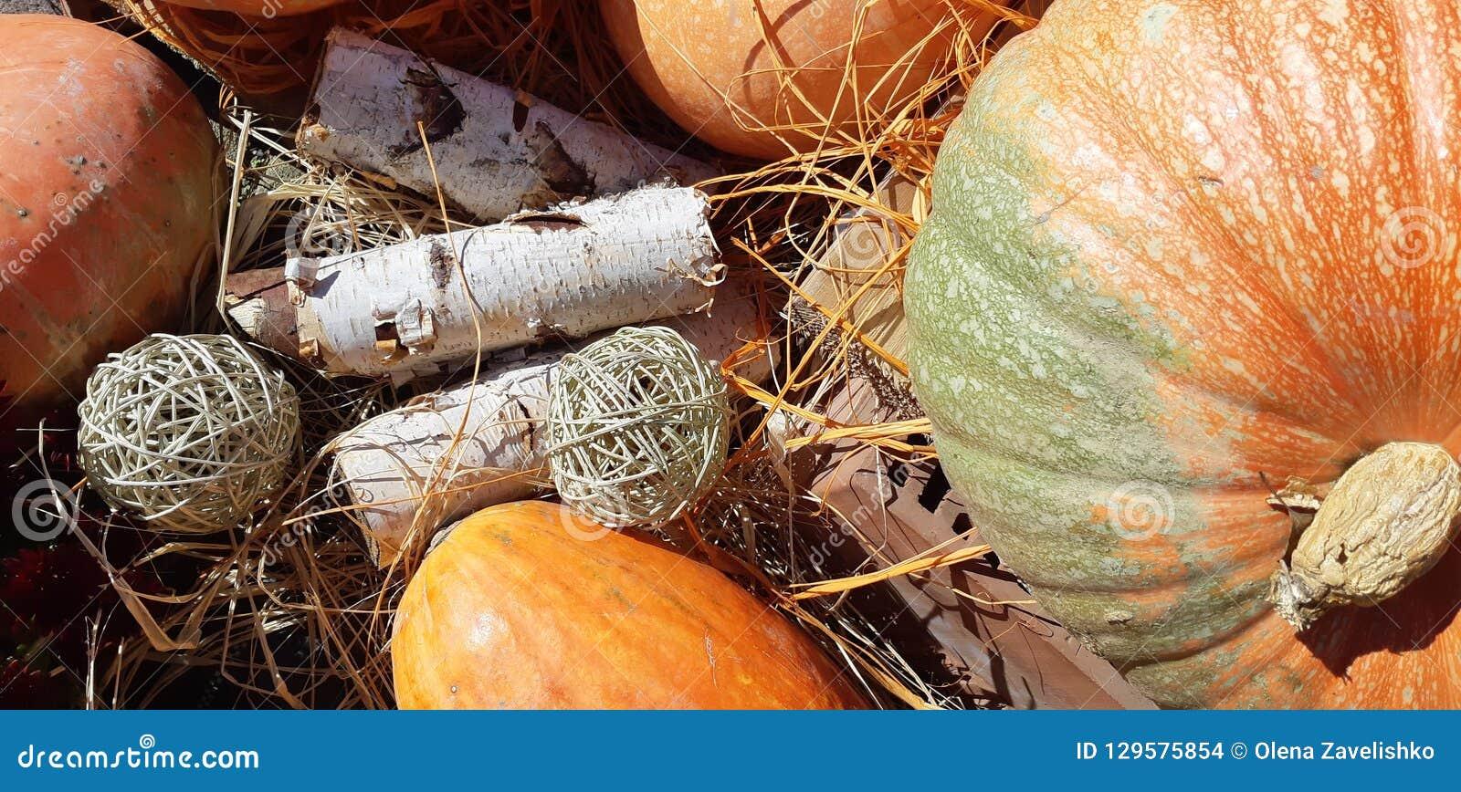 Potirons d automne et fleurs d automne
