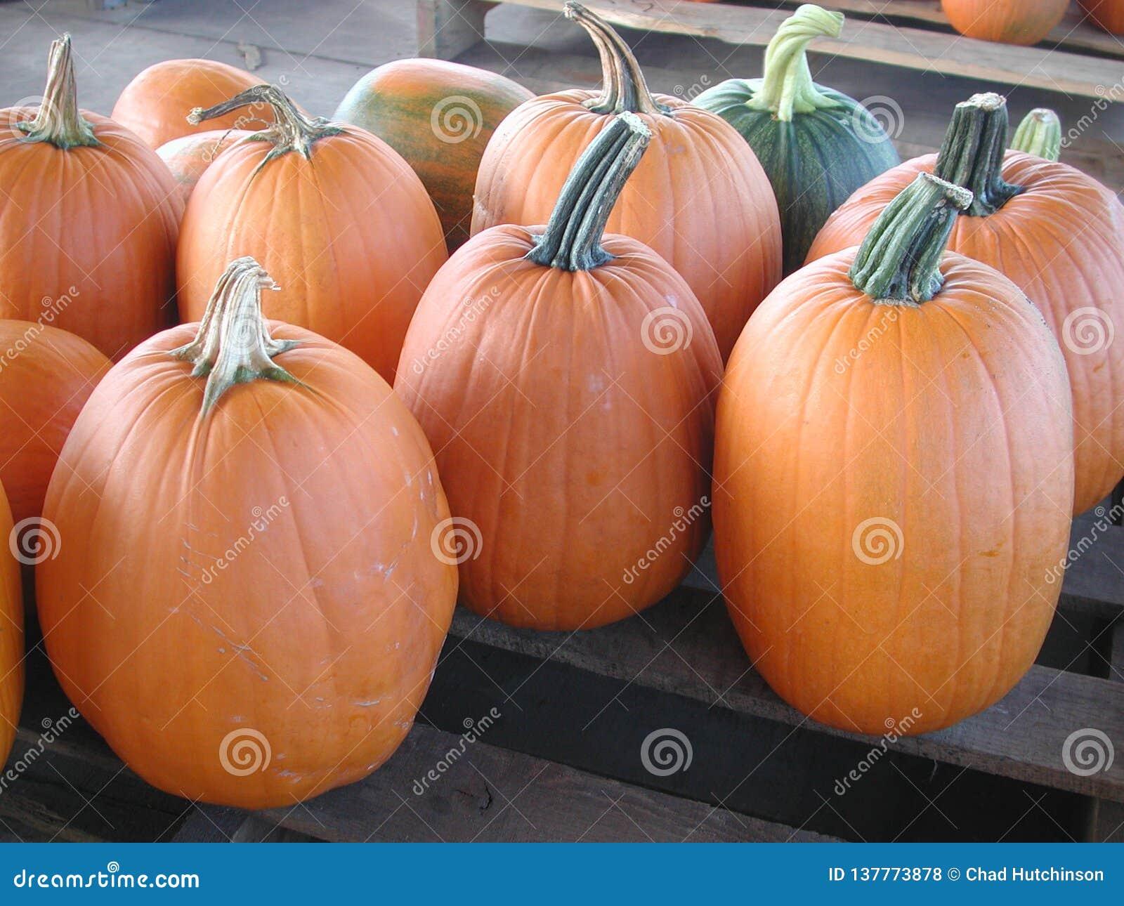 Potirons oranges grands sur une palette en bois