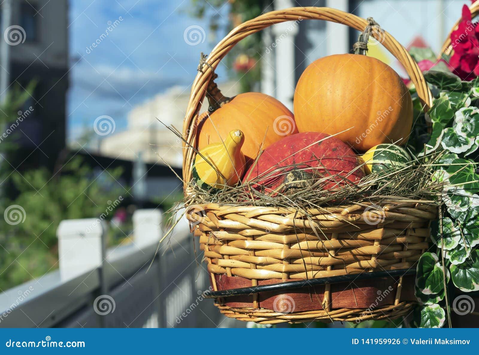 Potirons rouges et oranges dans un panier d un rotin