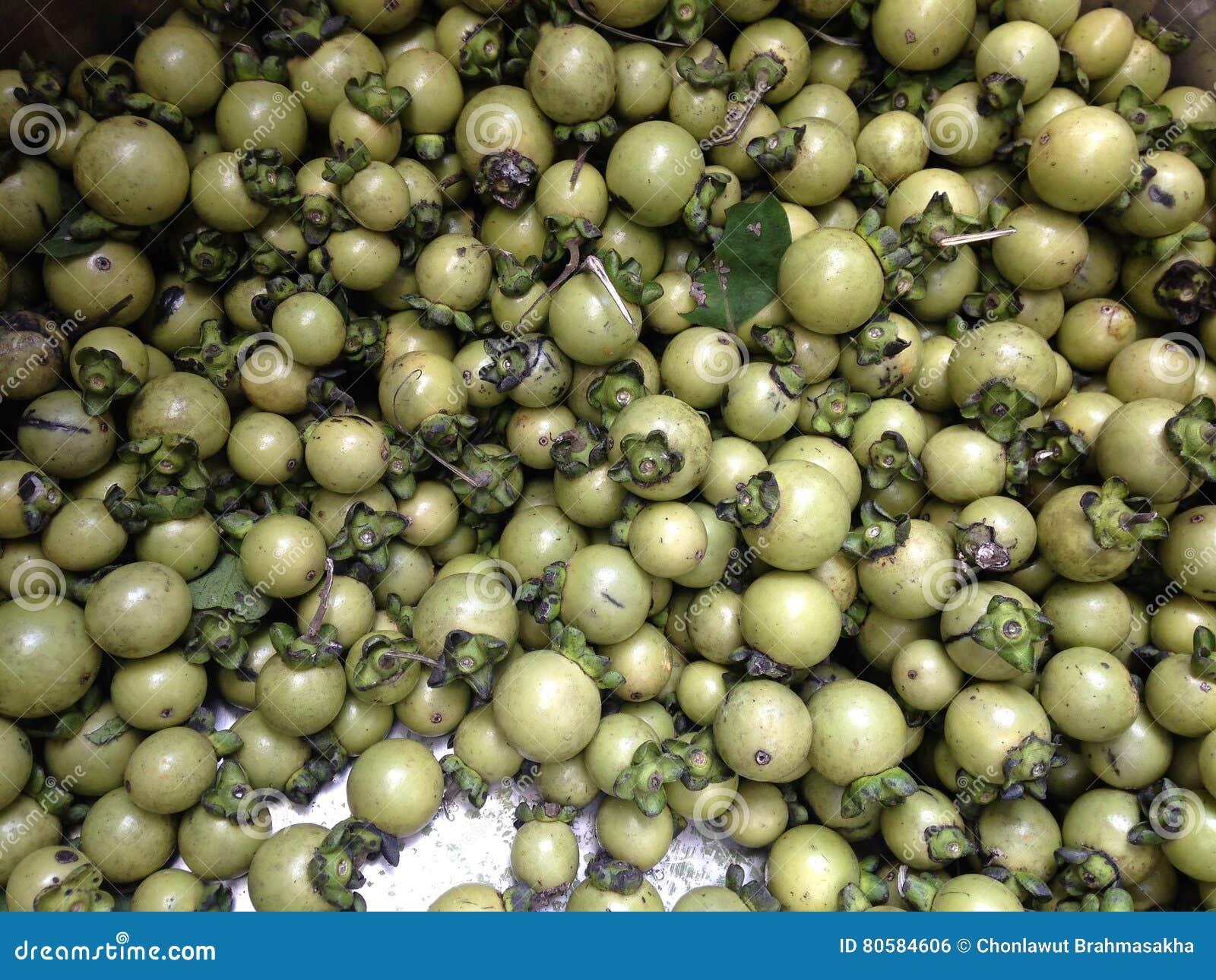 Potomstwa zielenieją heban drzewne owoc, hebanów mollis w wielkim stal nierdzewna zbiorniku,