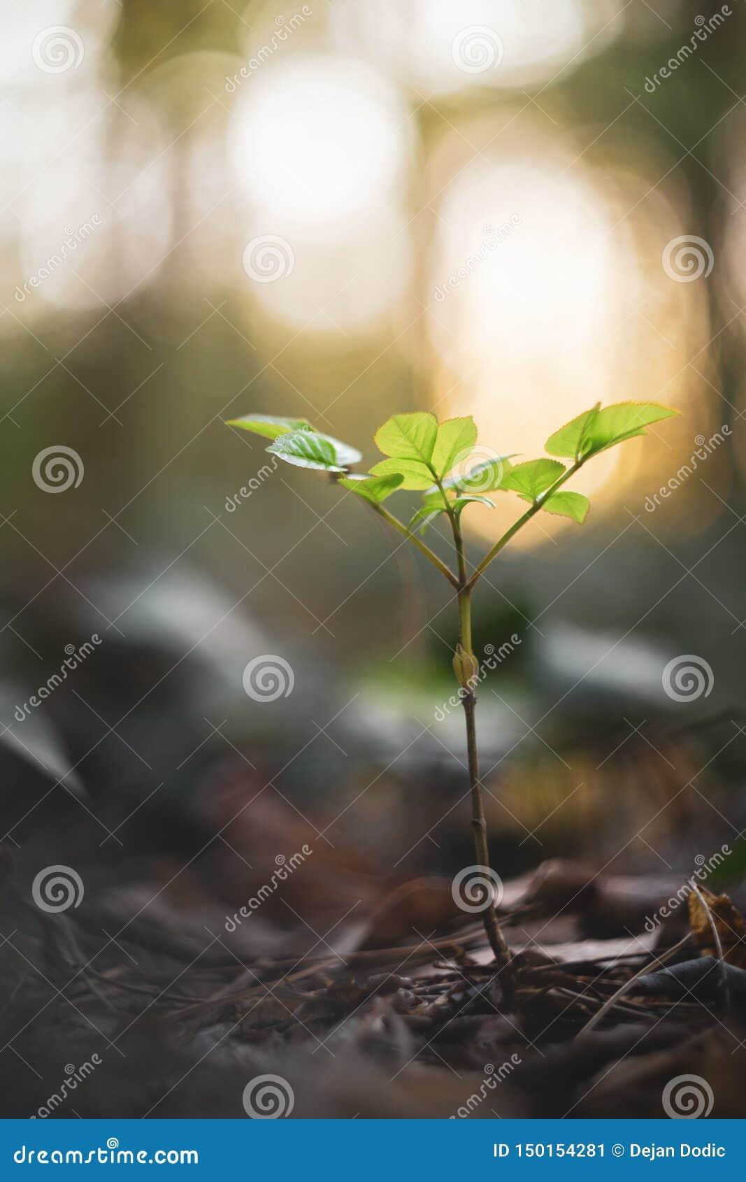 Potomstwa zielenieją roślinność w wiośnie