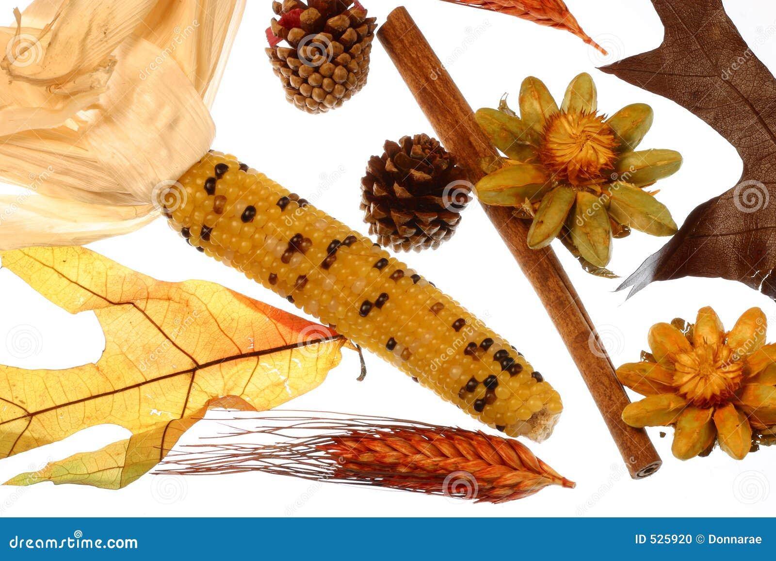 Potpourri do milho indiano do autum, da vara de canela, de flores secadas & de cones do pinho.