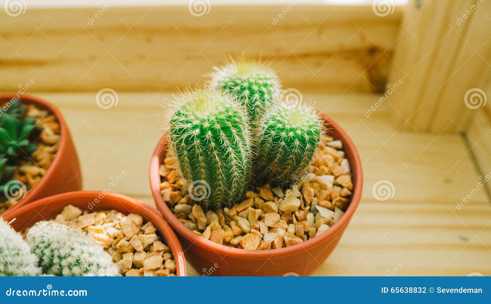 Pots de cactus dans la boîte en bois