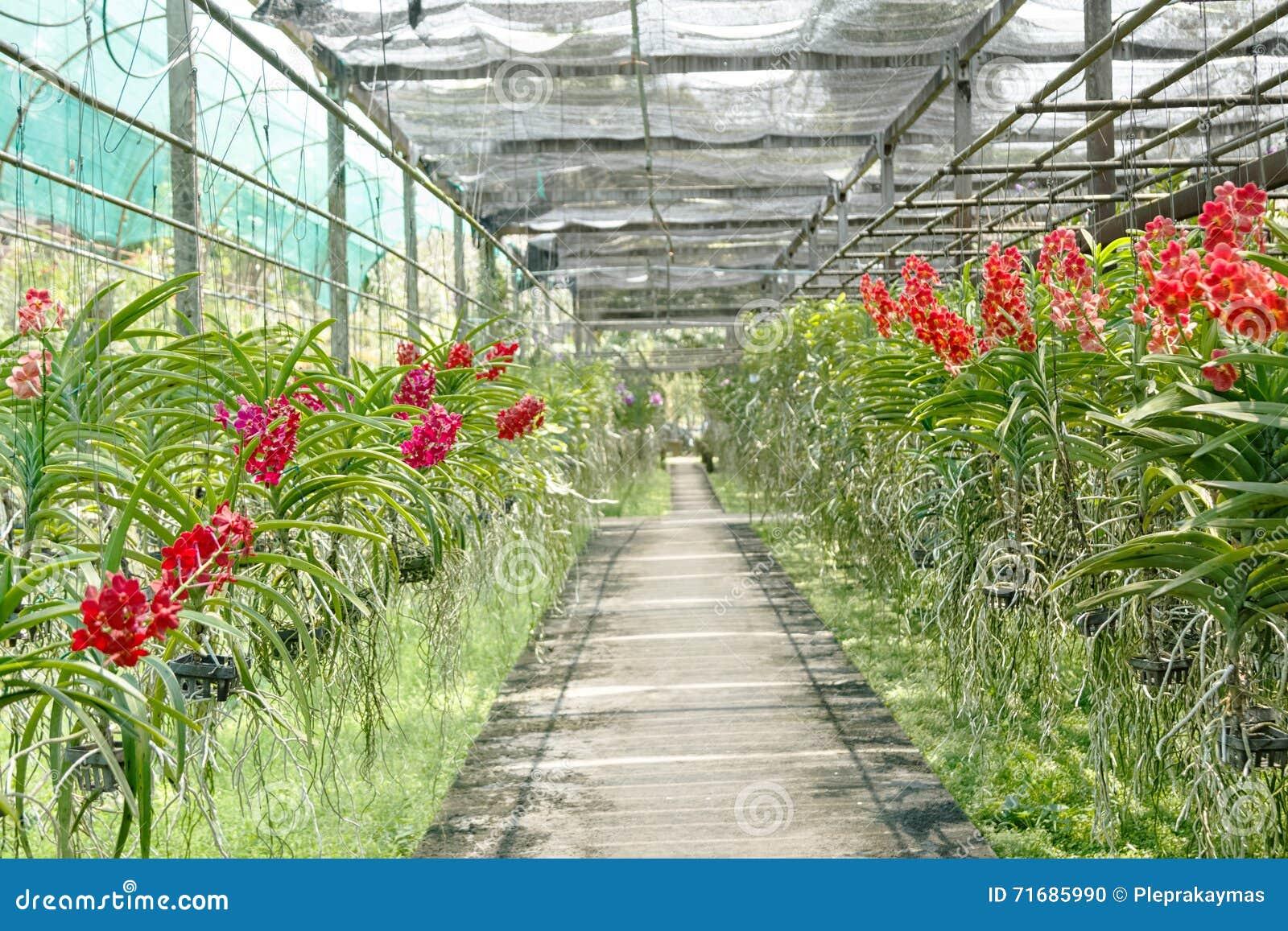 pots de fleur d'orchidée sur une pépinière d'usine photo stock