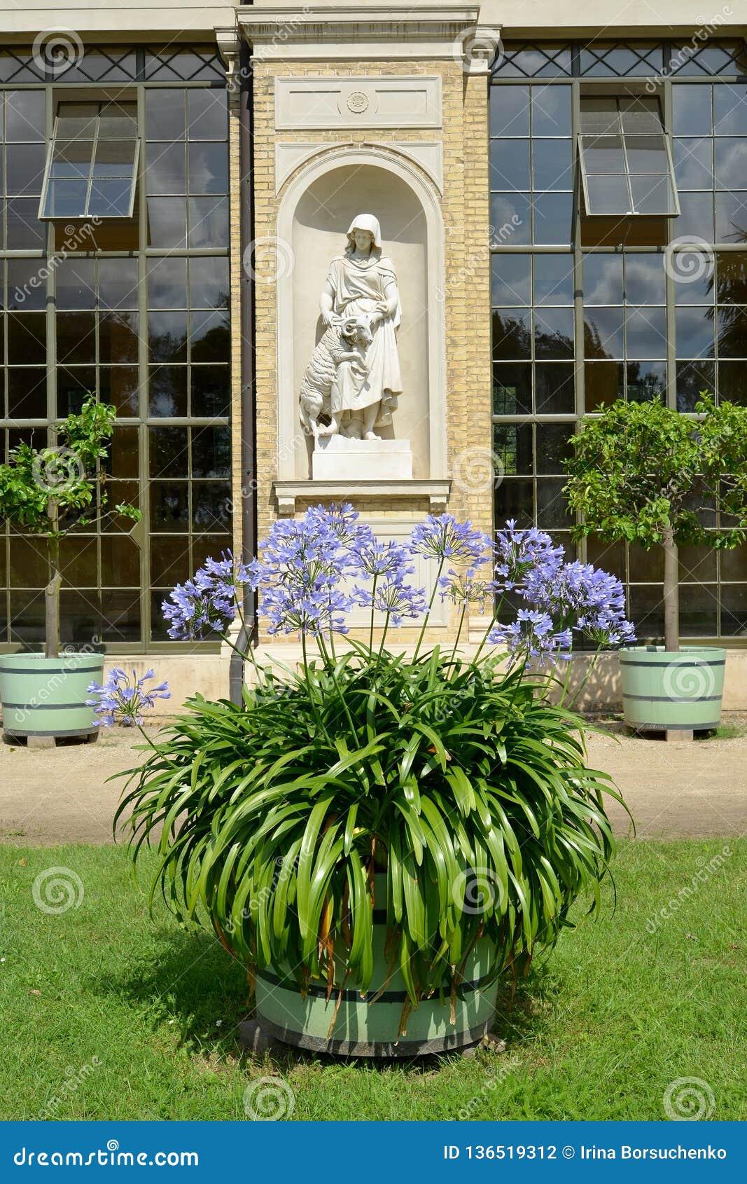 Potsdam, Alemanha Lírio africano de florescência na perspectiva de uma escultura em uma ameia do palácio da estufa Parque de San