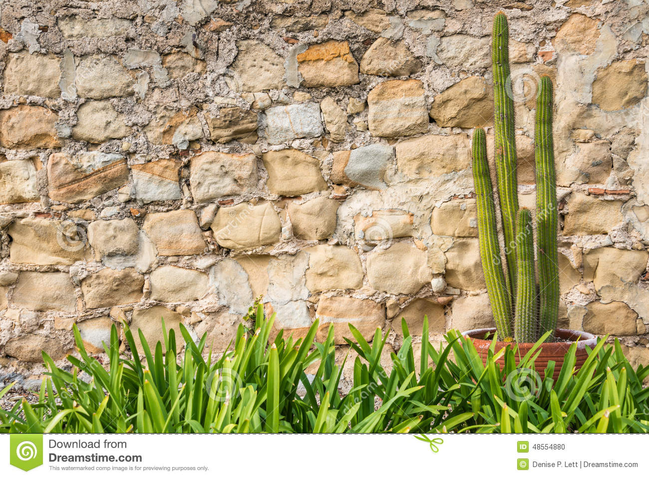 Potted cactus plant old stone wall grass border stock for Tall border grass