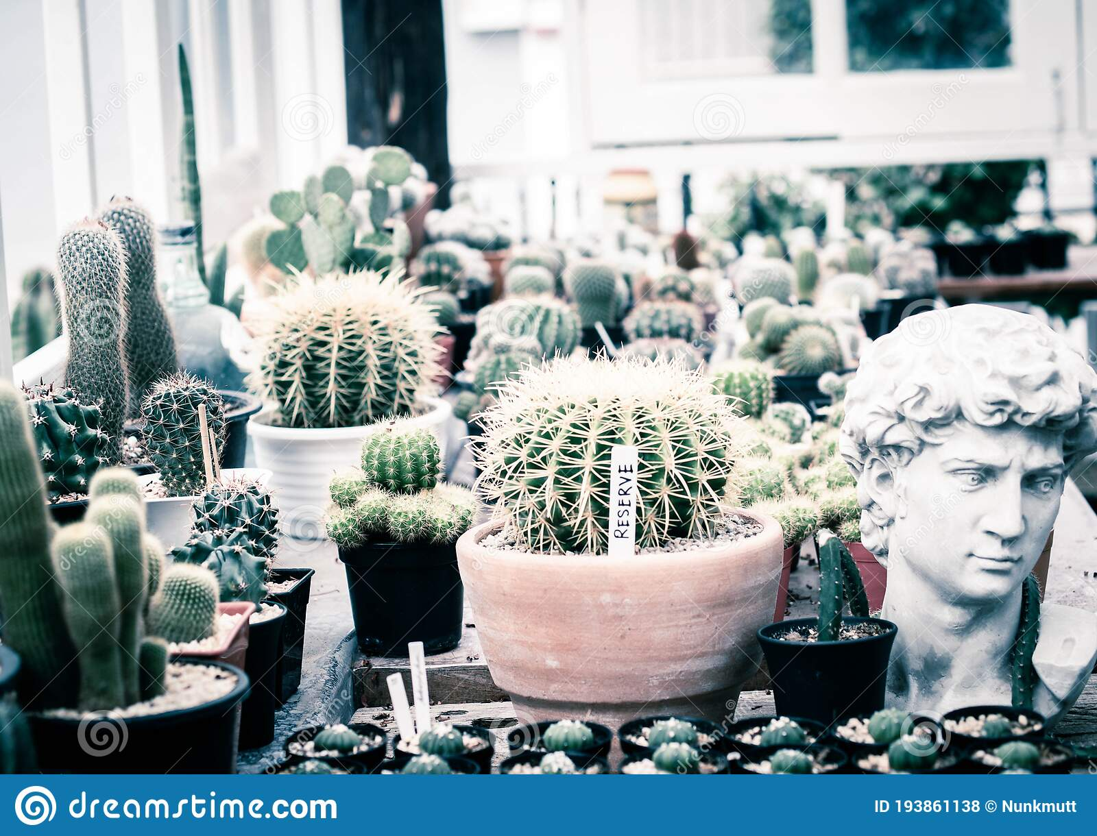 Potted Cactus Plants Next White Wooden Window Interior Inspiration Indoor Window Garden Small Succulent Cactus Pot Plants Stock Photo Image Of Arrangement Celebration 193861138