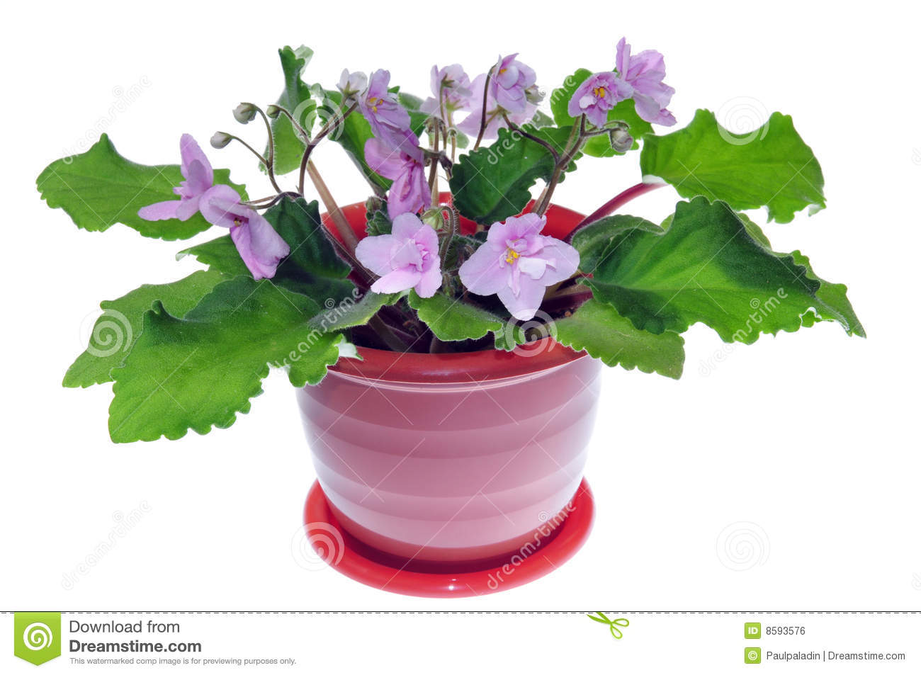 Potted Flower Royalty Free Stock Image - Image: 8593576