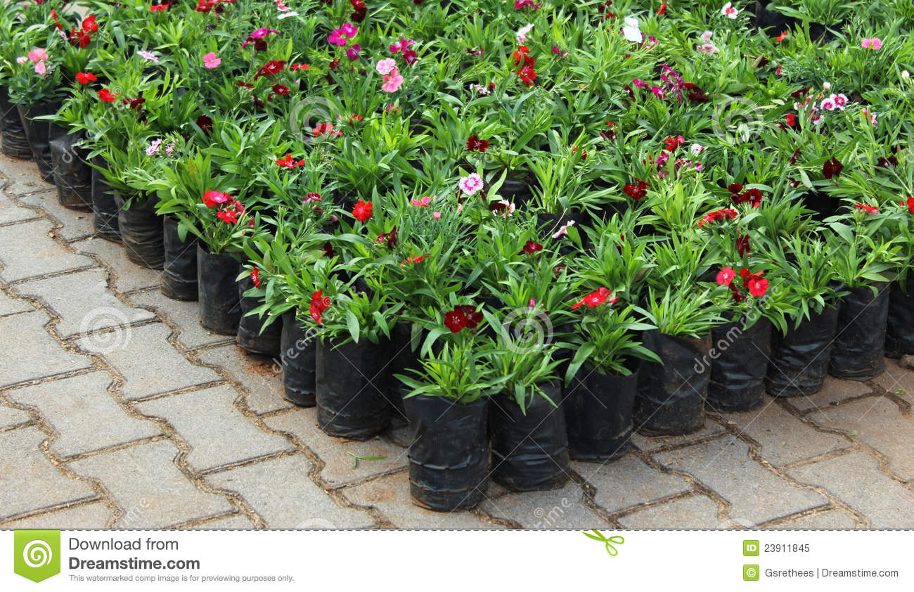 Potted Flower Plants Royalty Free Stock Image