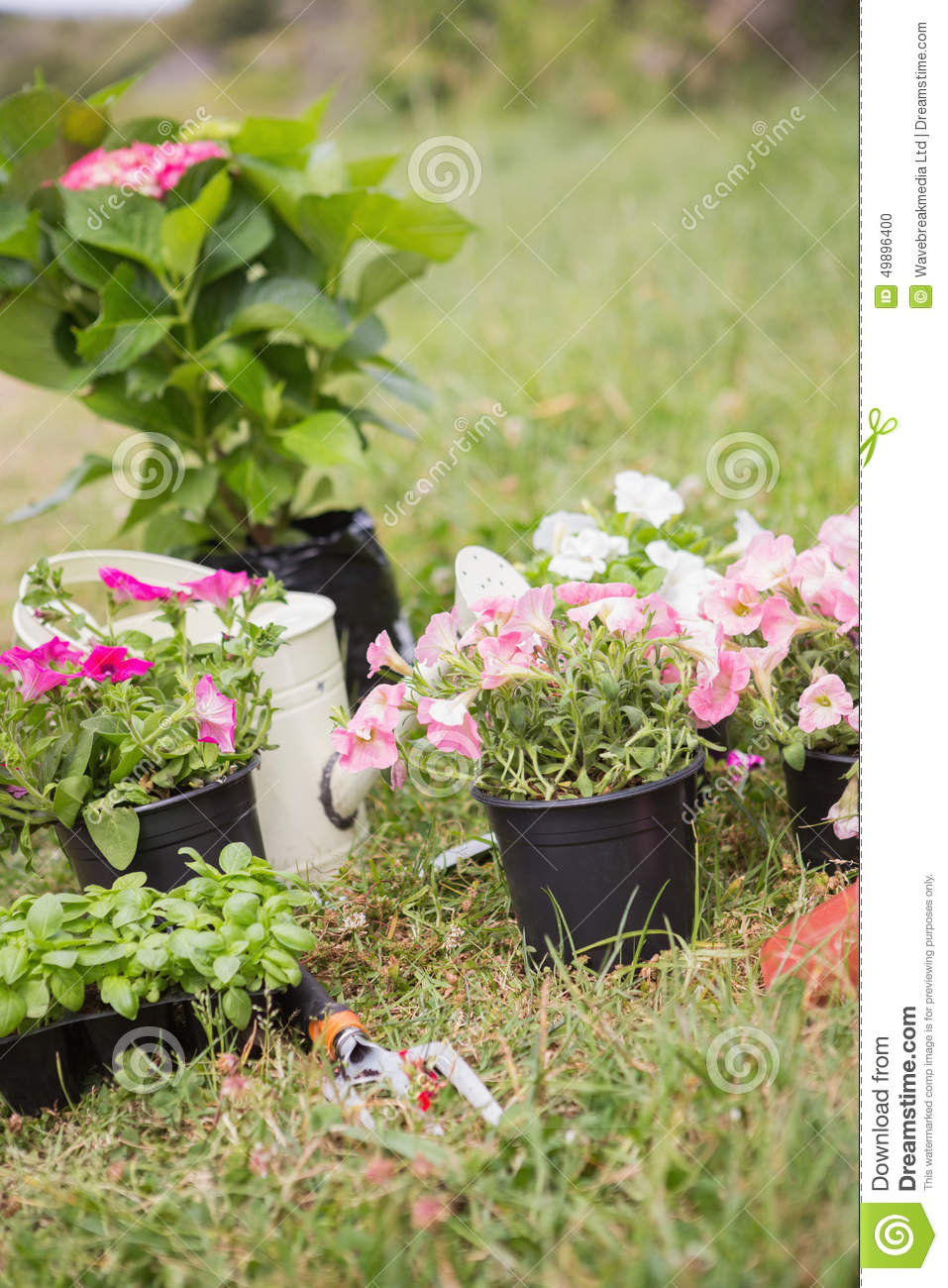Potted Flowers Ready To Be Planted Stock Photo Image Of