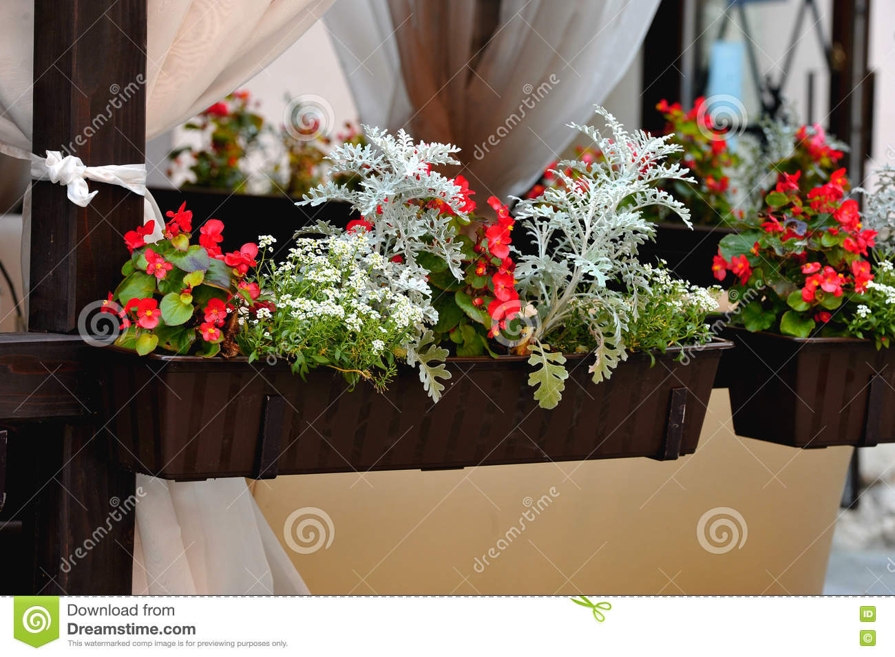 Potted Flowers Stock Image Image Of Beauty Flowers 82561133