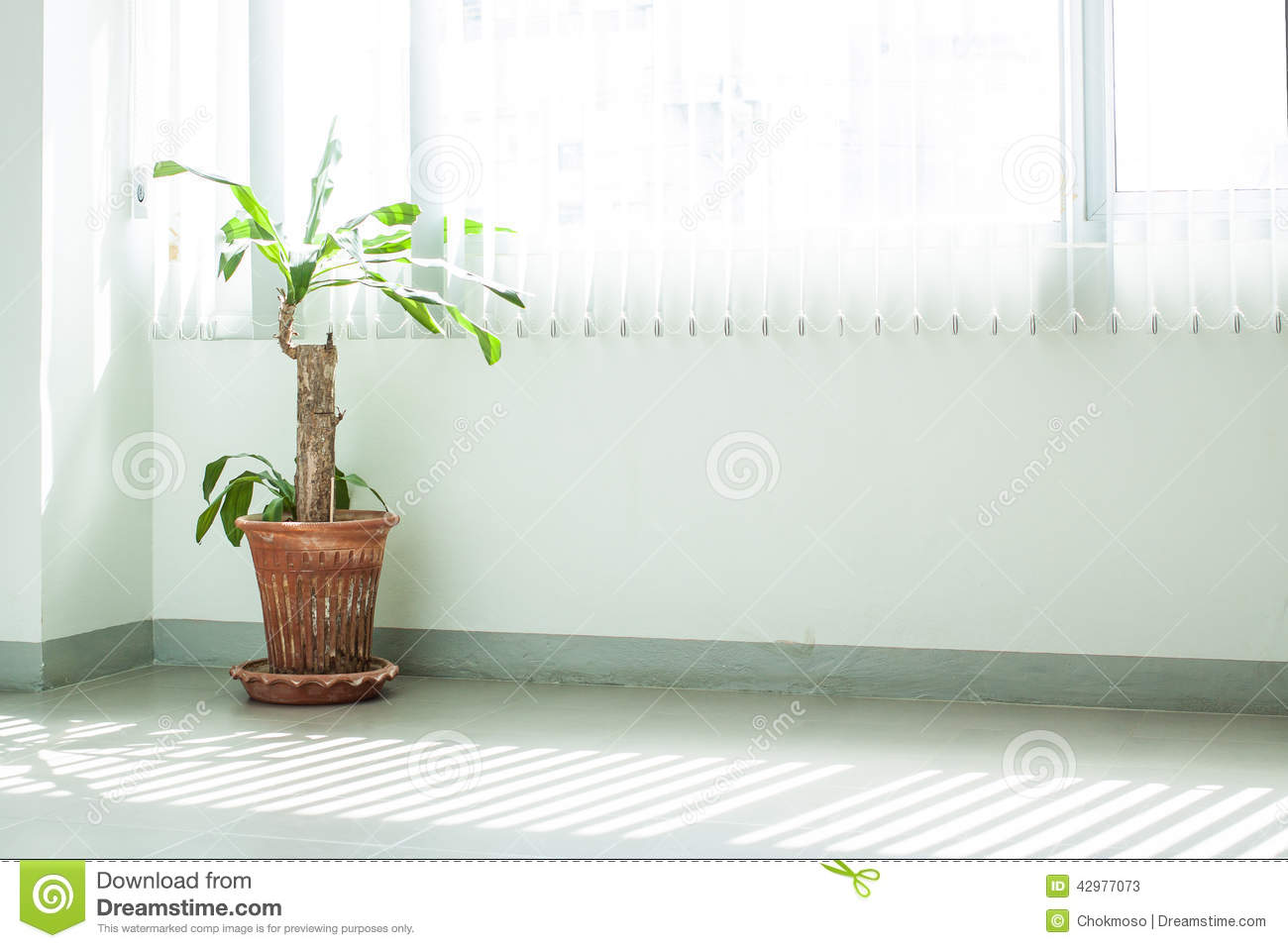 Potted ornamental