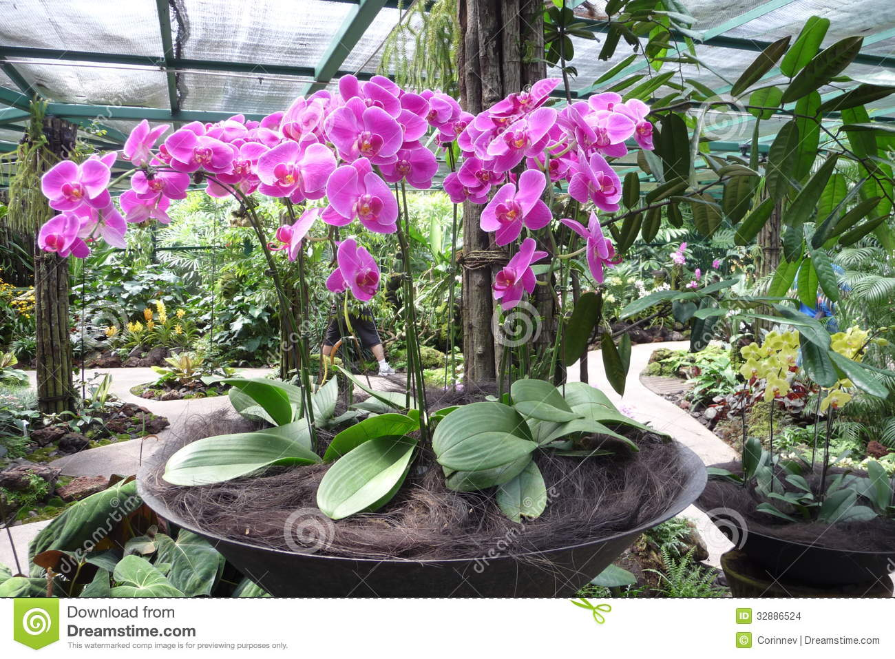 Potted pink orchid garden arrangement in singapore stock for Landscape arrangement