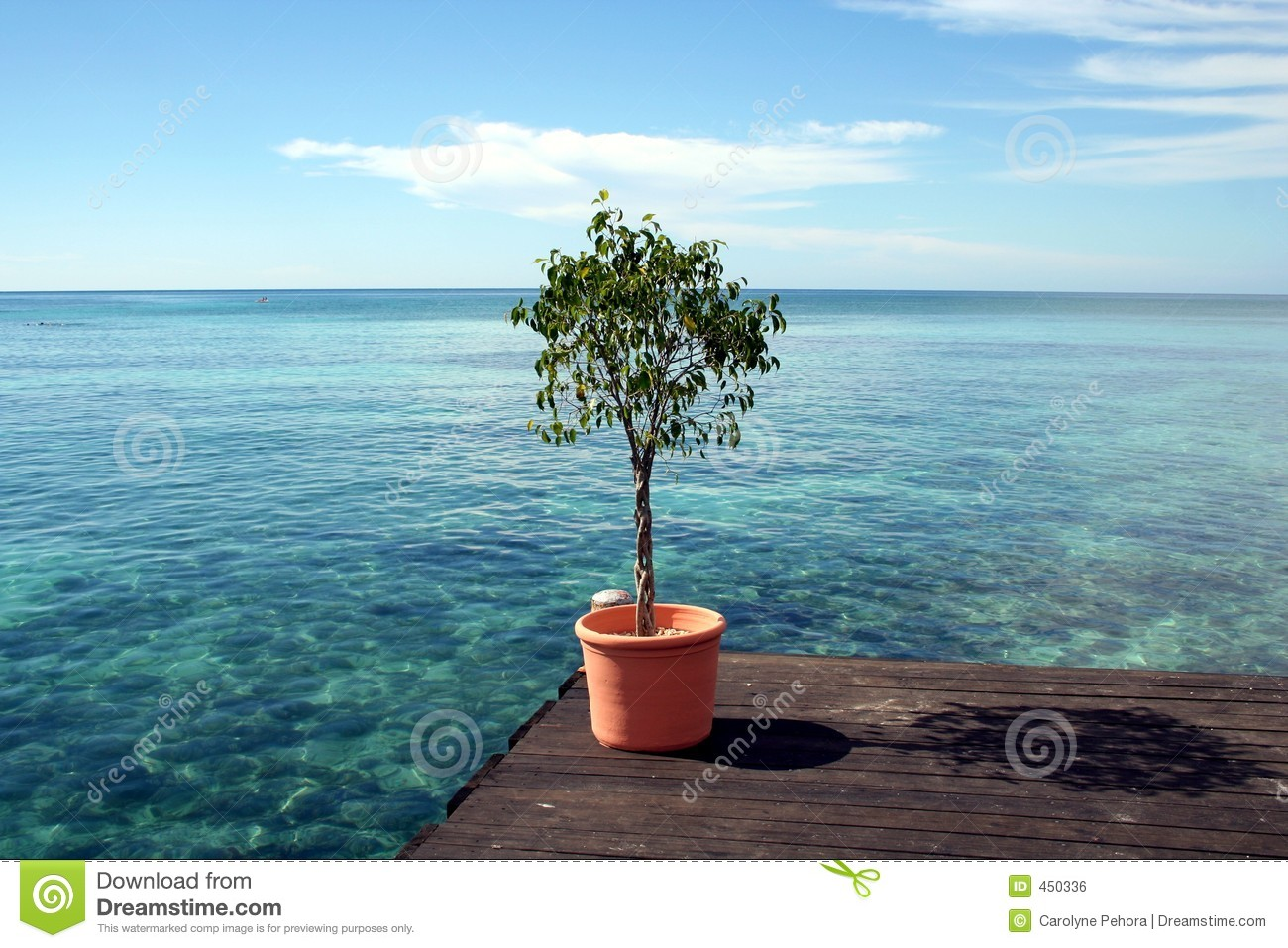 Download Potted Plant stock photo. Image of water, tropics, deck - 450336