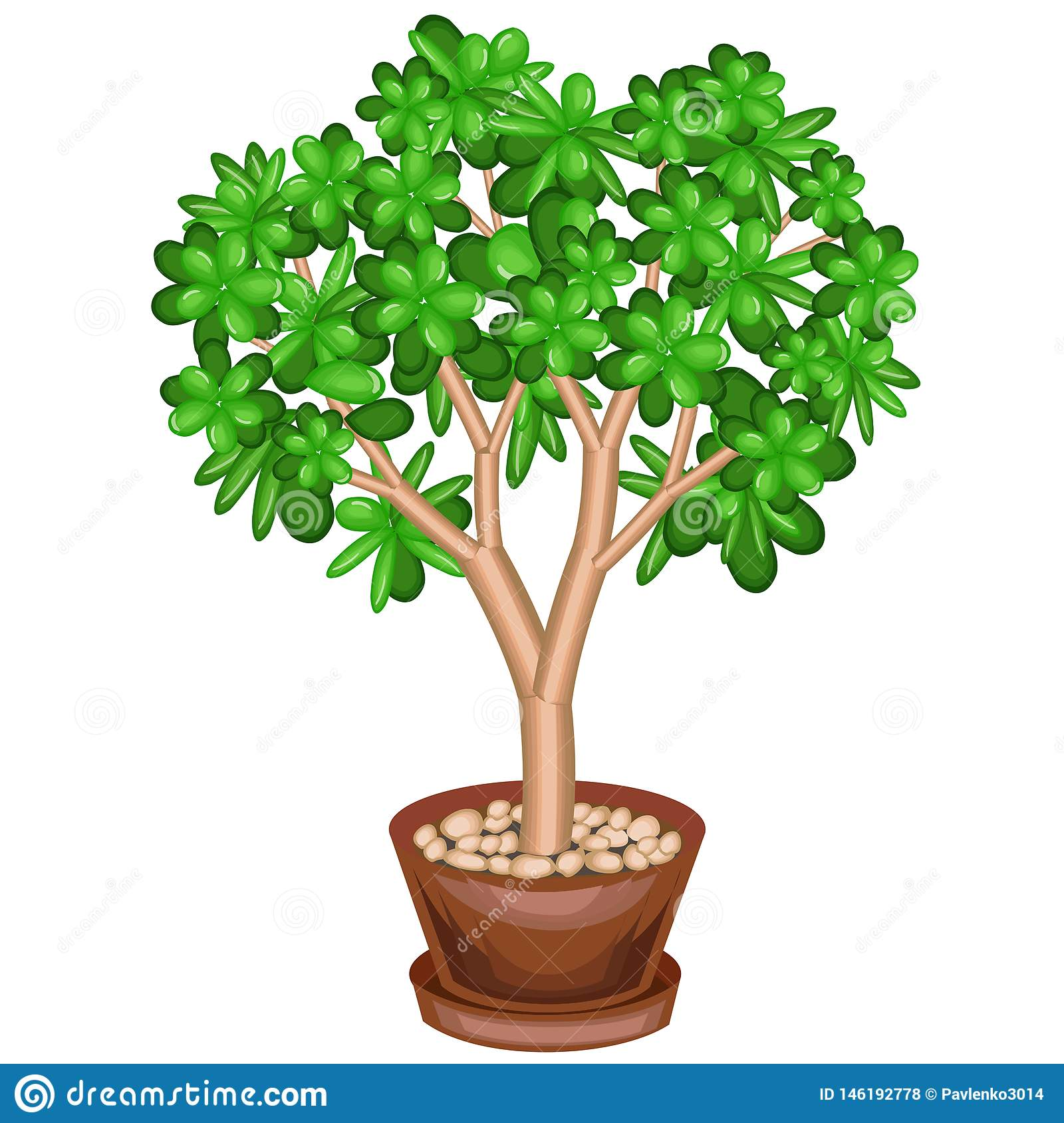 A potted plant. Green money tree, Crassulaceae, with fleshy green leaves. Symbol of happiness, luck and wealth. Pleasant