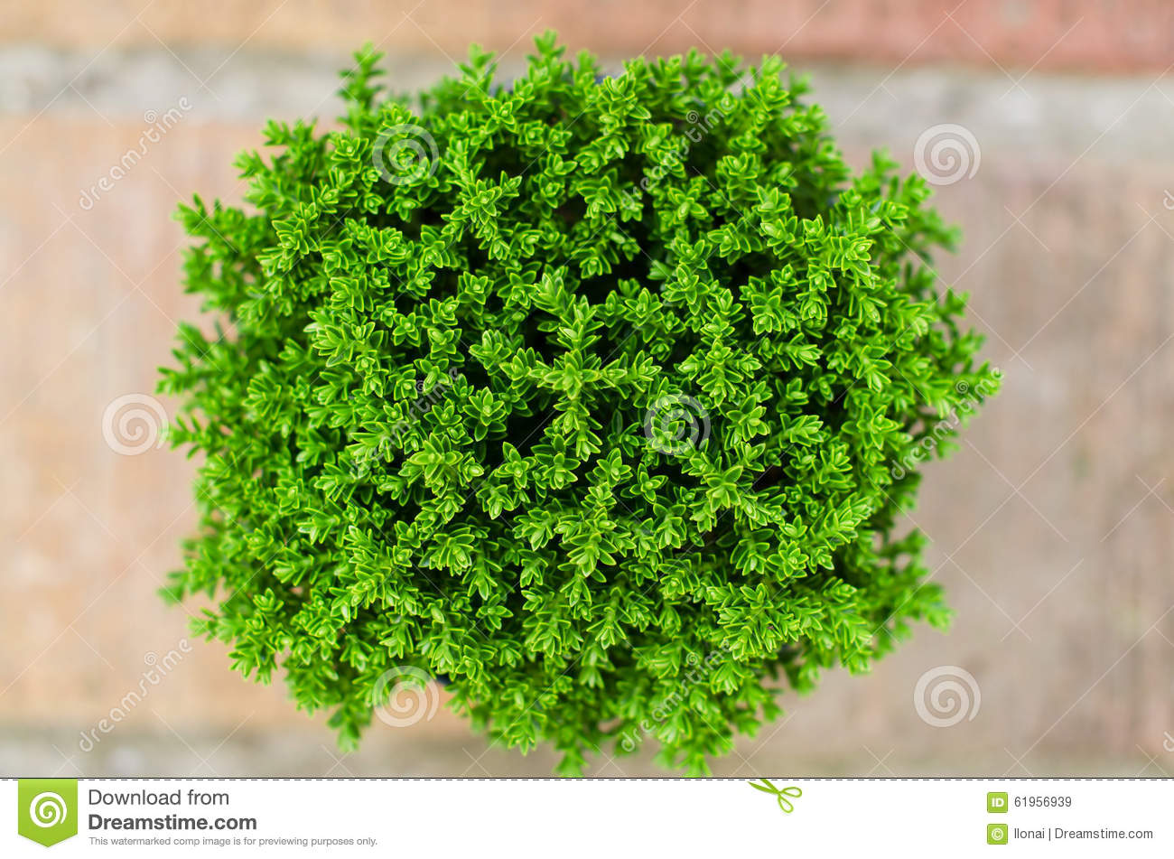 Potted plant stock photo image 61956939 for Green floor plant