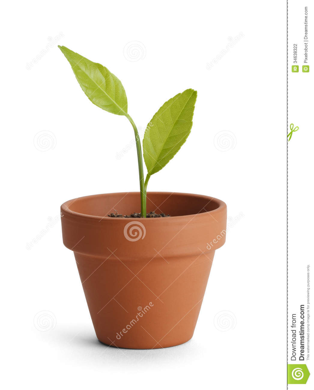 Potted Plant Stock Photo Image Of Empty Photography