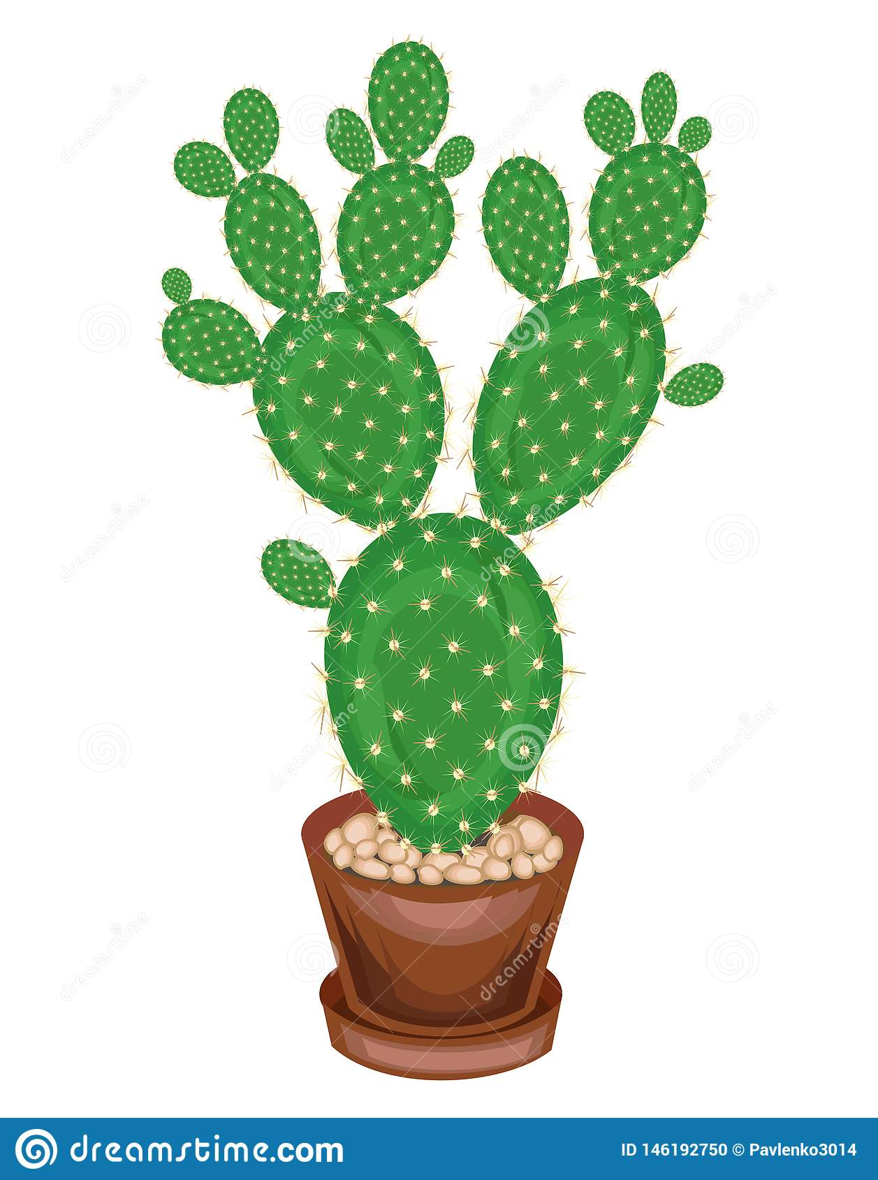 A potted plant is shown. Cactus Opuntia with flat juicy green leafy stems, covered with sharp thorns. Lovely hobby for collectors