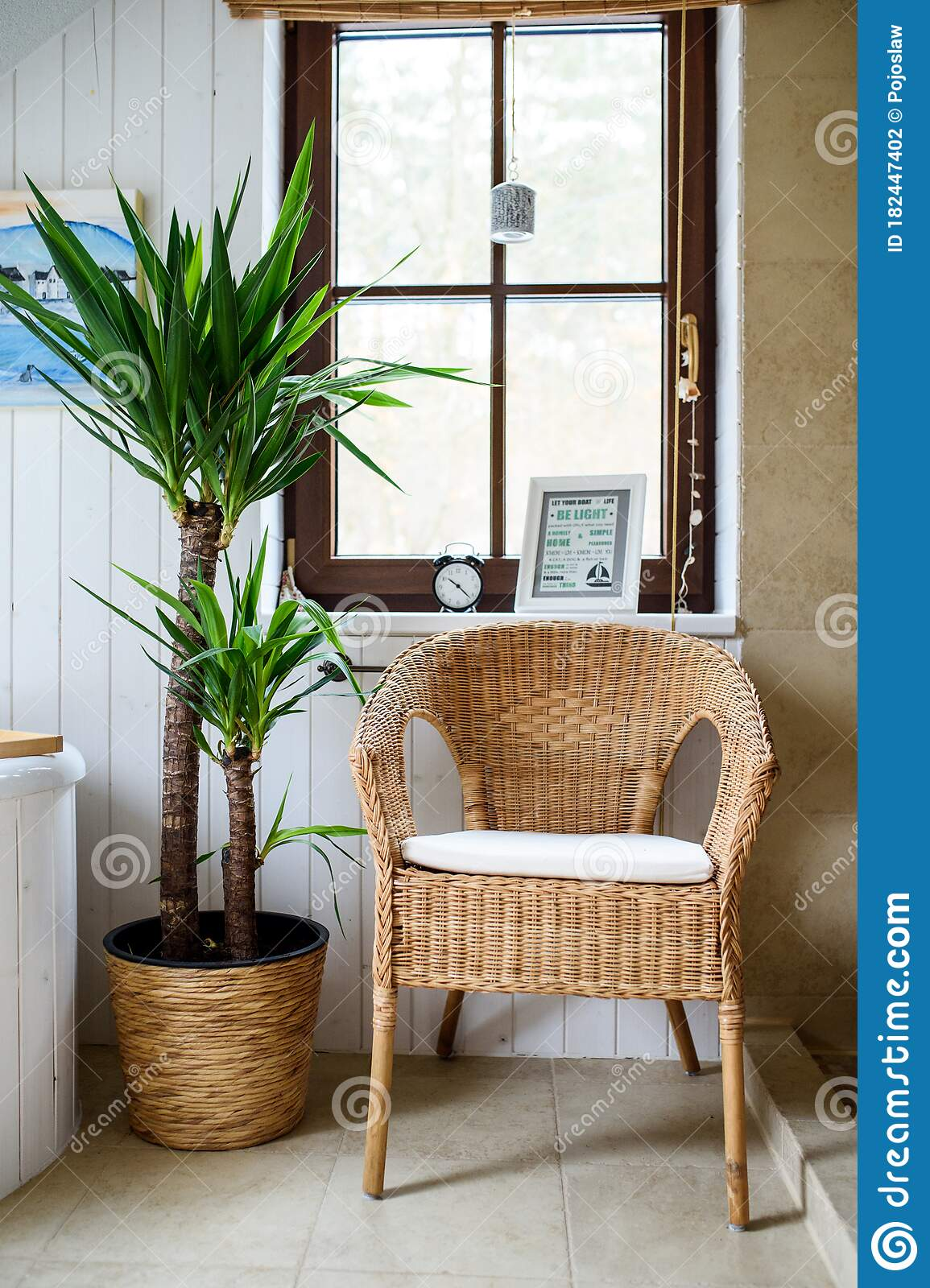 Potted Plant And Wicker Chair In Bathroom At Home. Stock Photo
