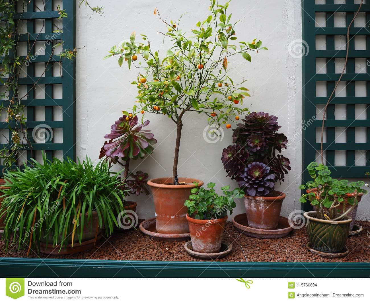 Potted plants growing in a conservatory against a white wall