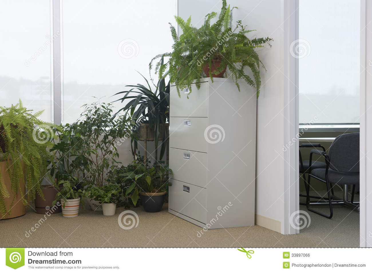 office plants royalty free stock image - image: 20141836