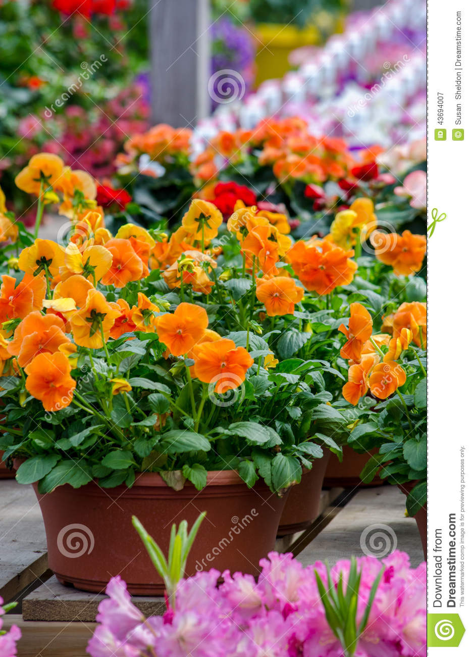 Potted spring flowers stock image image of filled pots 43694007 potted spring flowers mightylinksfo