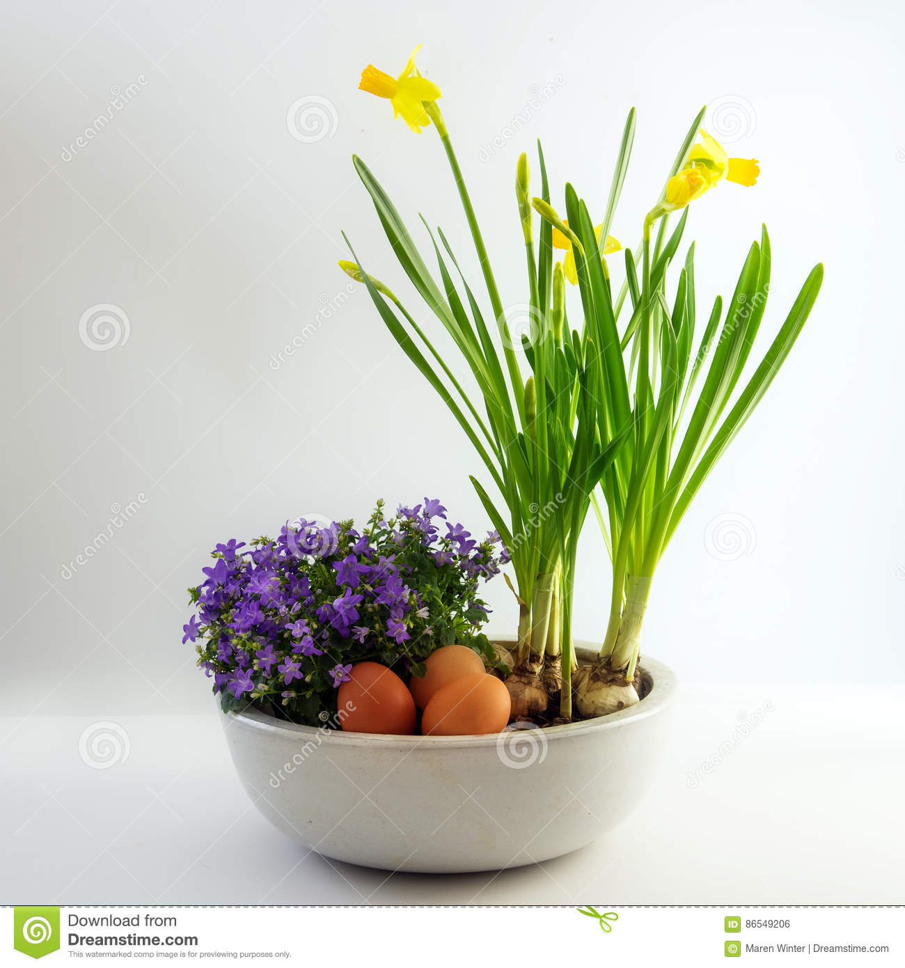 Potted Spring Flowers And Eggs As Easter Decoration Daffodils A