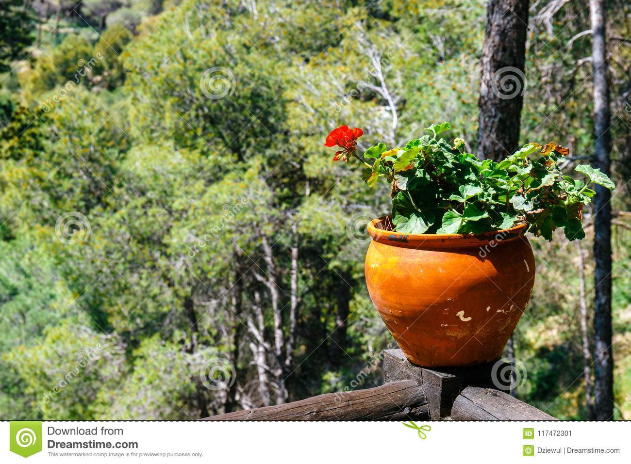Potted spring flowers on a fence stock image image of decoration potted spring flowers on a fence mightylinksfo