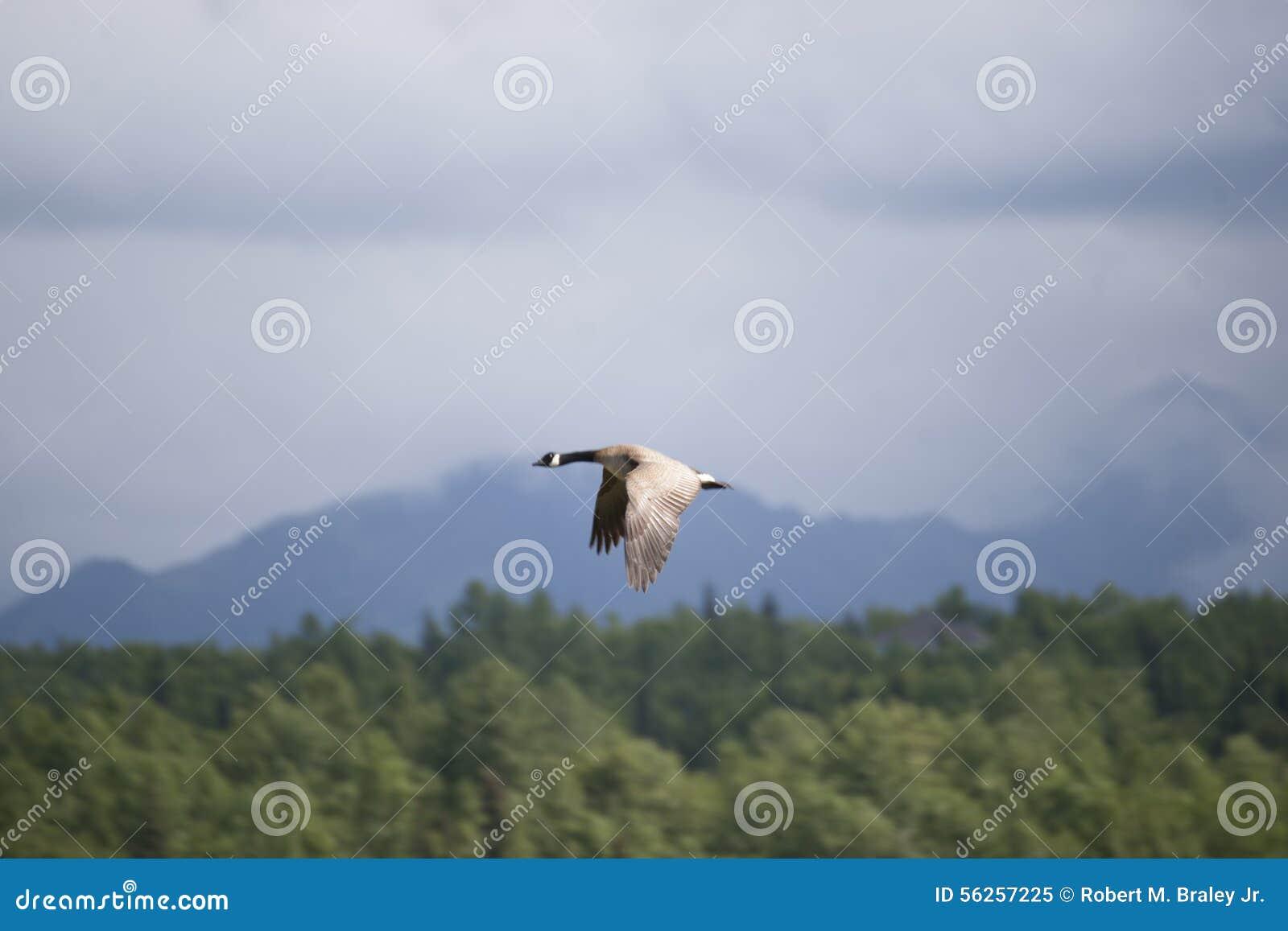Download Potter Marsh Wildlife Refuge Anchorage Alaska Stock Image - Image of viewing, alaska: 56257225