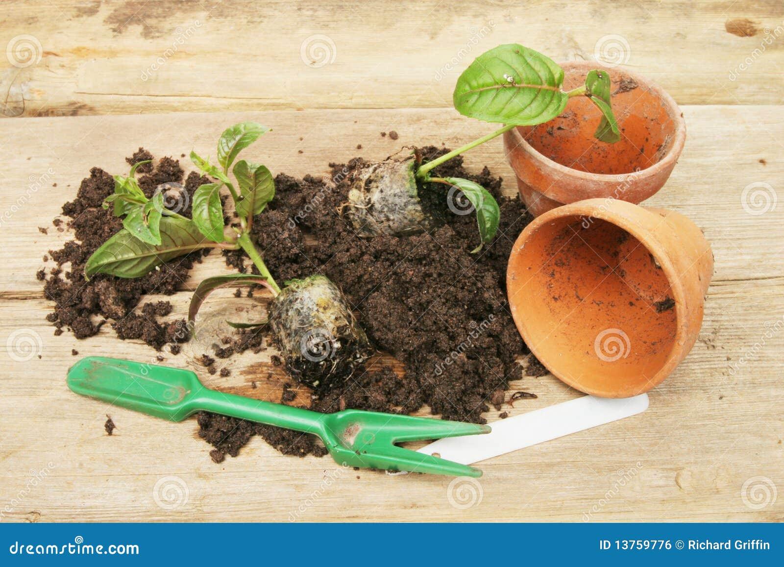 Potting on plants