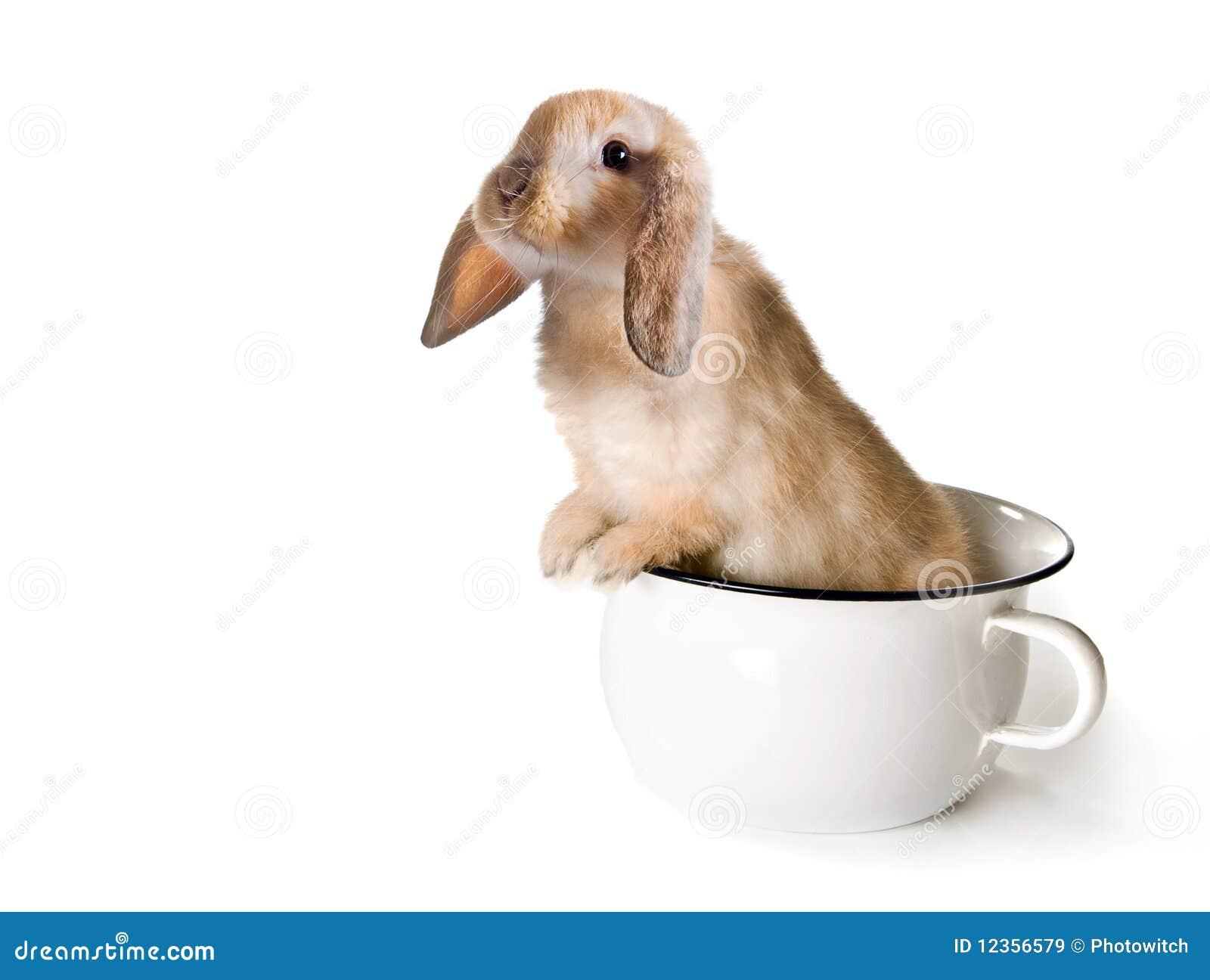 Potty rabbit