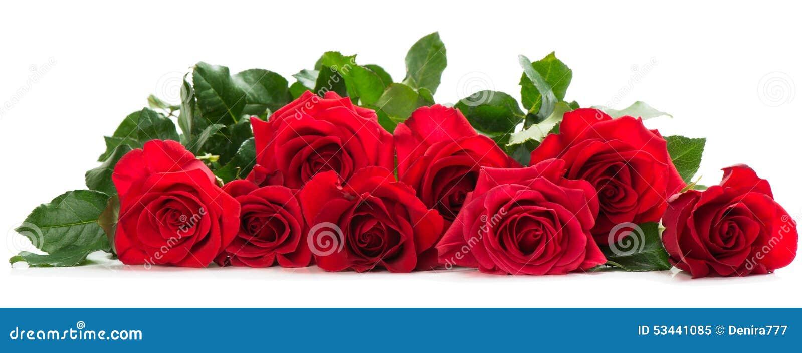Poucas rosas vermelhas