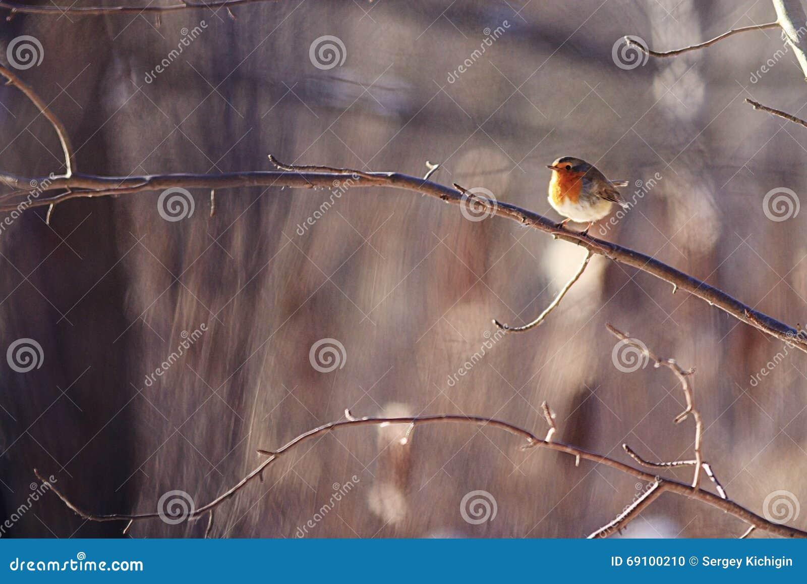 Pouco pássaro da mola