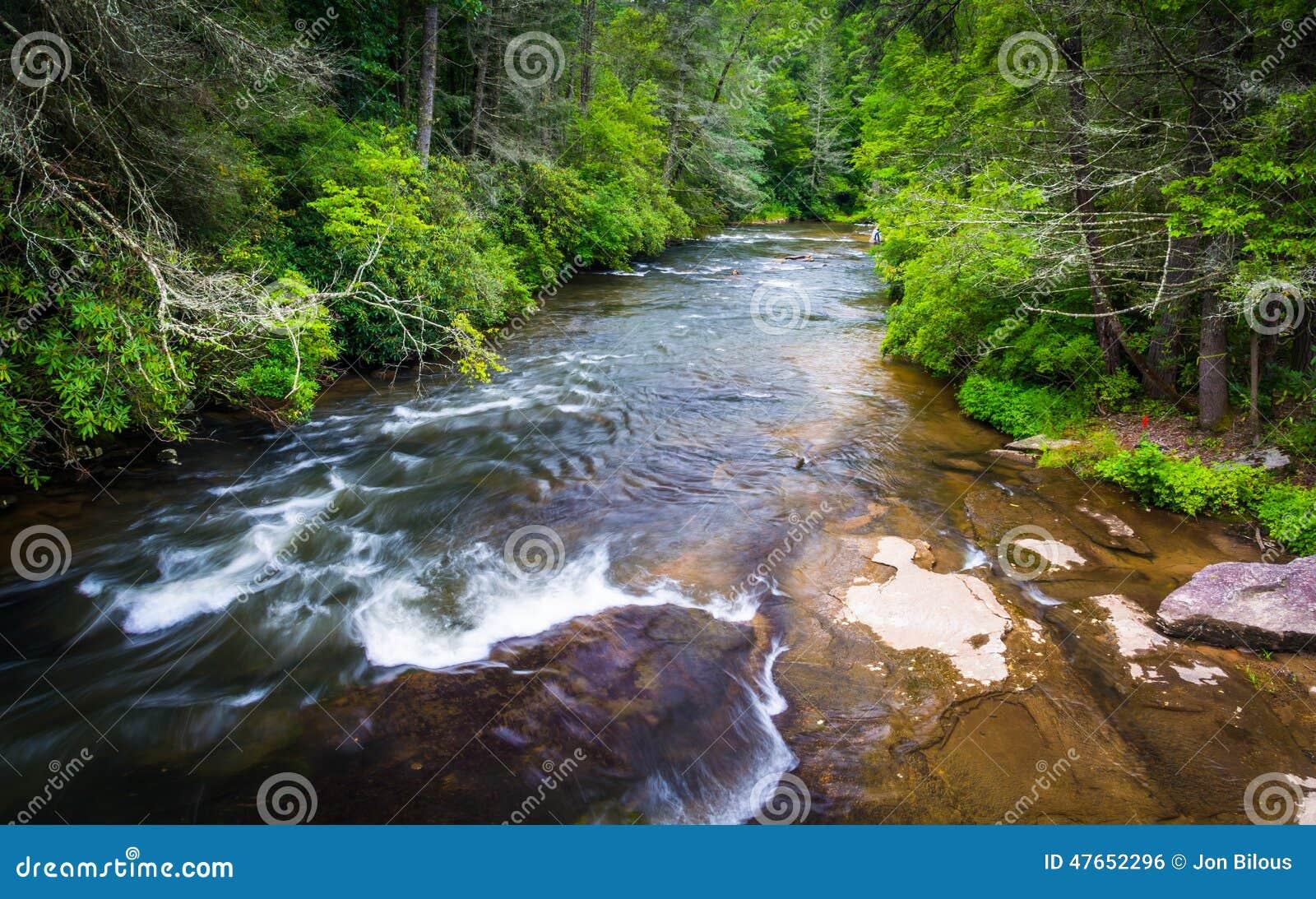 Pouco rio, na floresta do estado de Du Pont, North Carolina