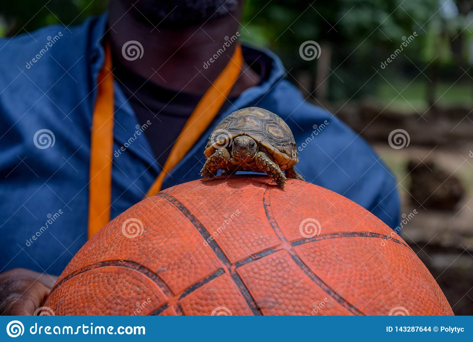 Pouco tartaruga