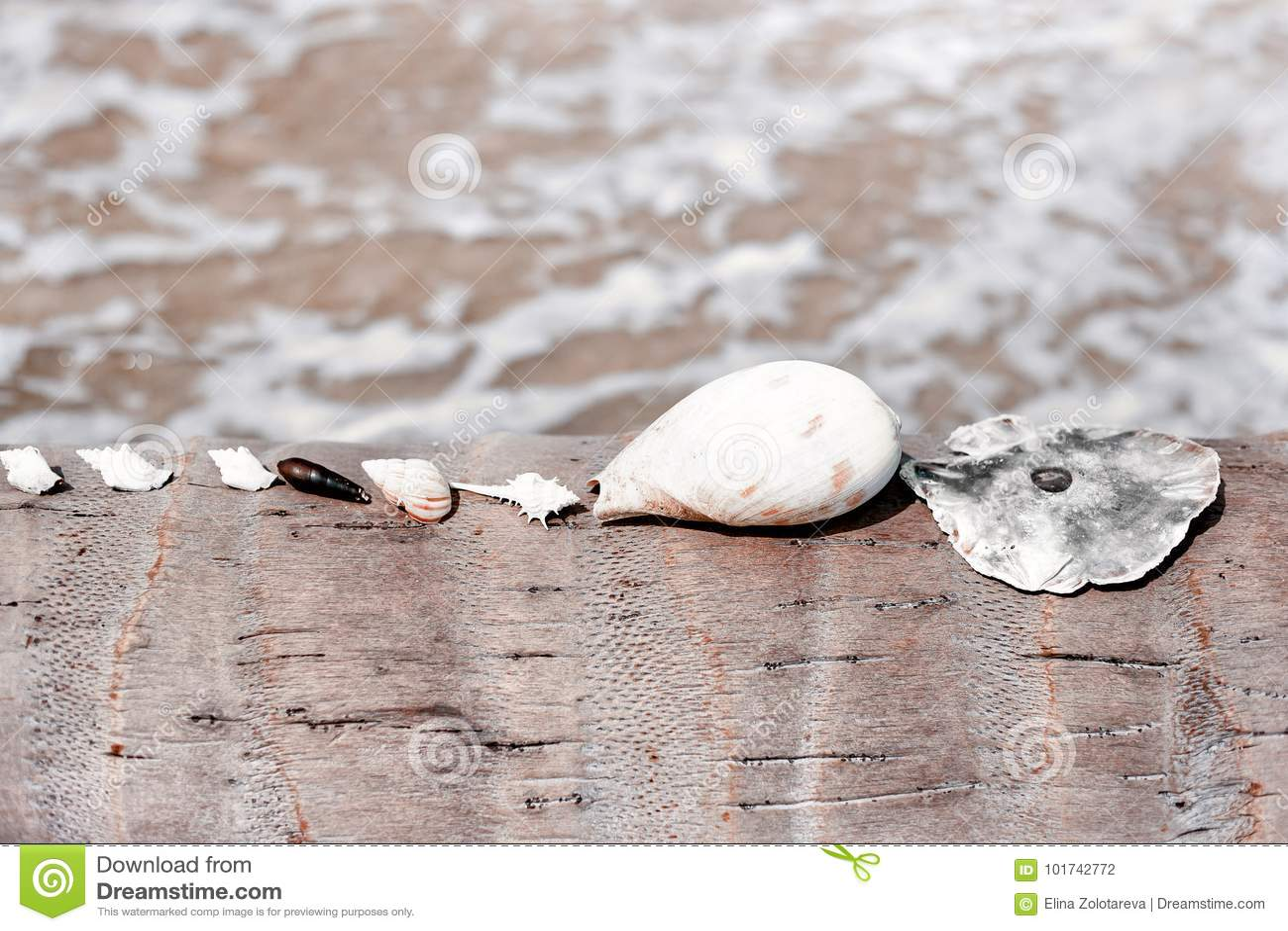 Poucos shell do mar que encontram-se em seguido na palmeira