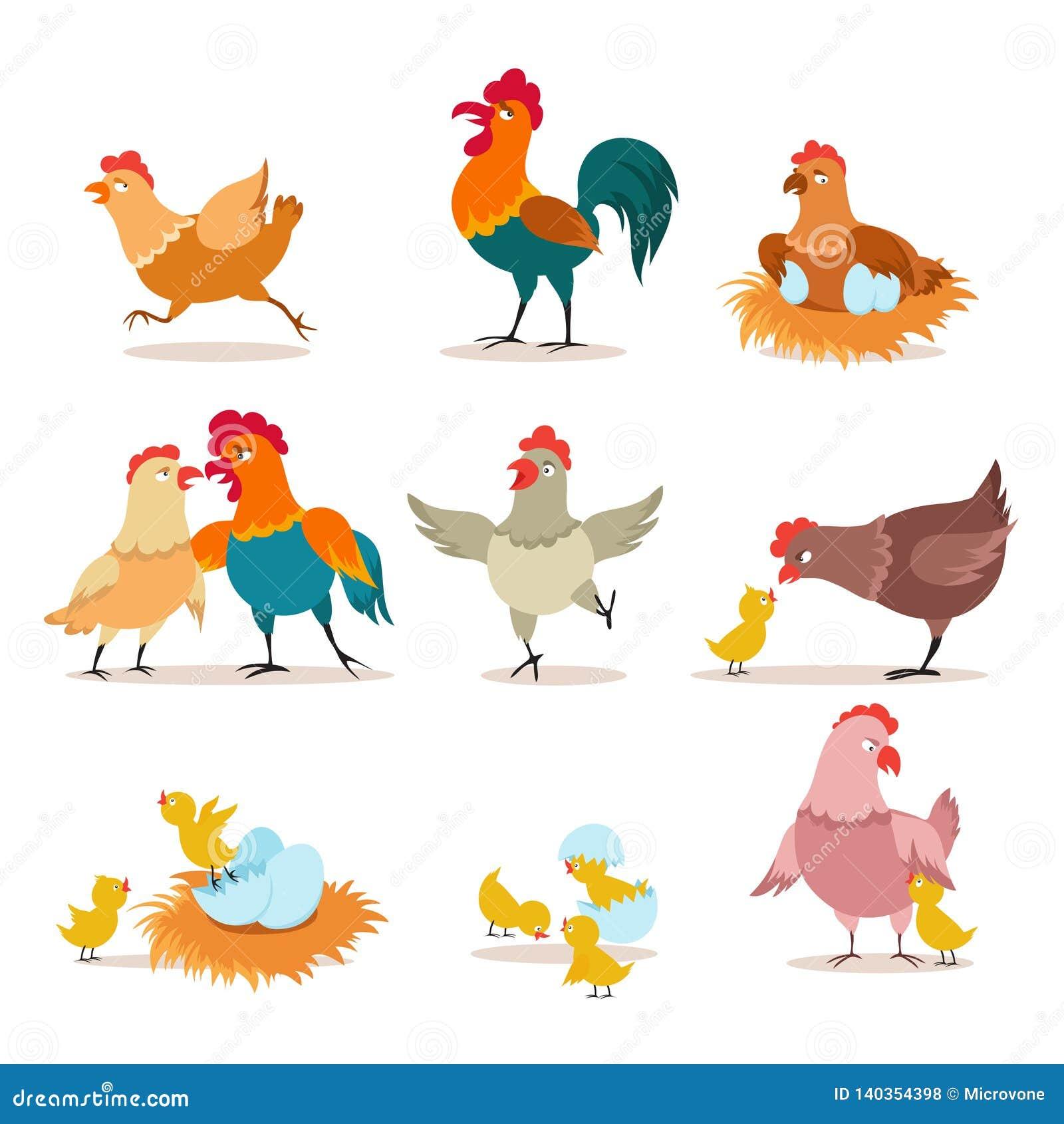 Poulet De Dessin Anime Poussin Avec Les Oeufs La Poule Et Le Coq