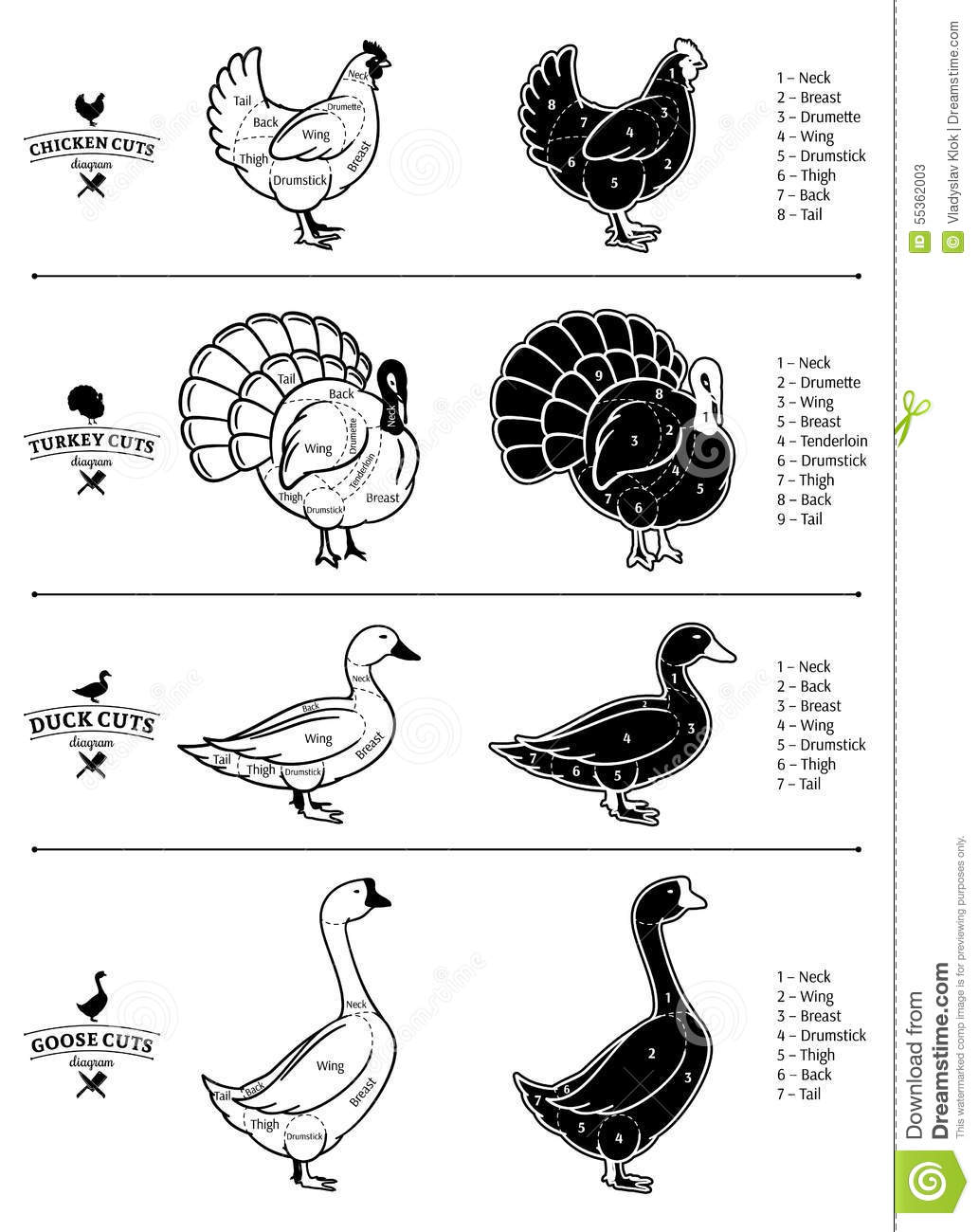 Poultry Cuts Diagrams Stock Vector Illustration Of Beef 55362003 Chicken Diagram Royalty Free