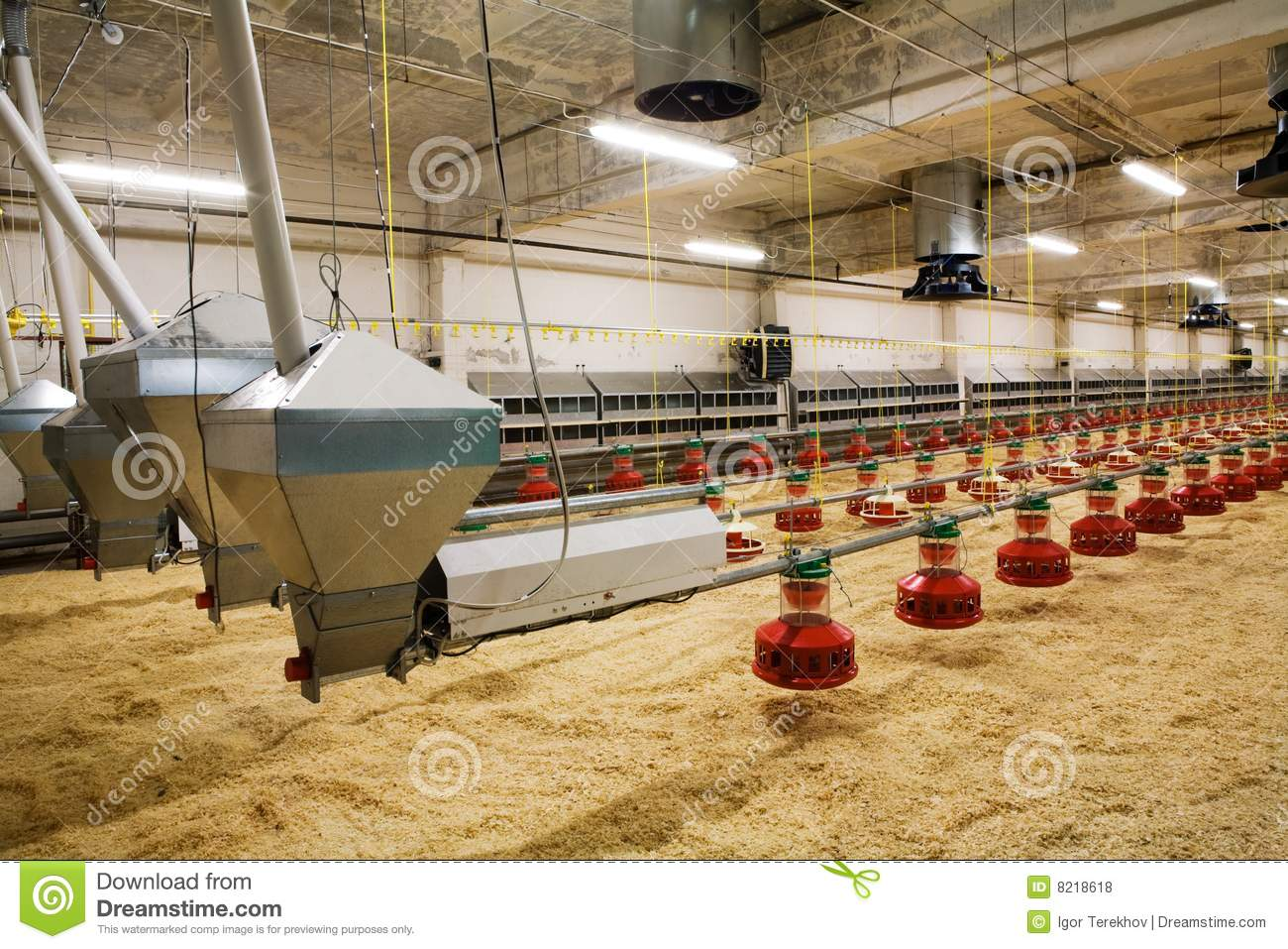 Poultry Farm Royalty Free Stock Photos - Image: 8218618