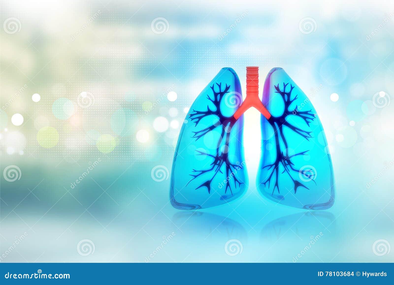 Poumons humains