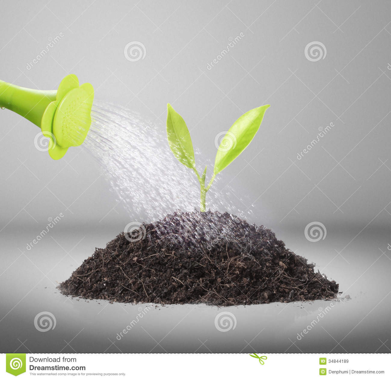 Pouring Watering Can On Plant Water Royalty Free Stock
