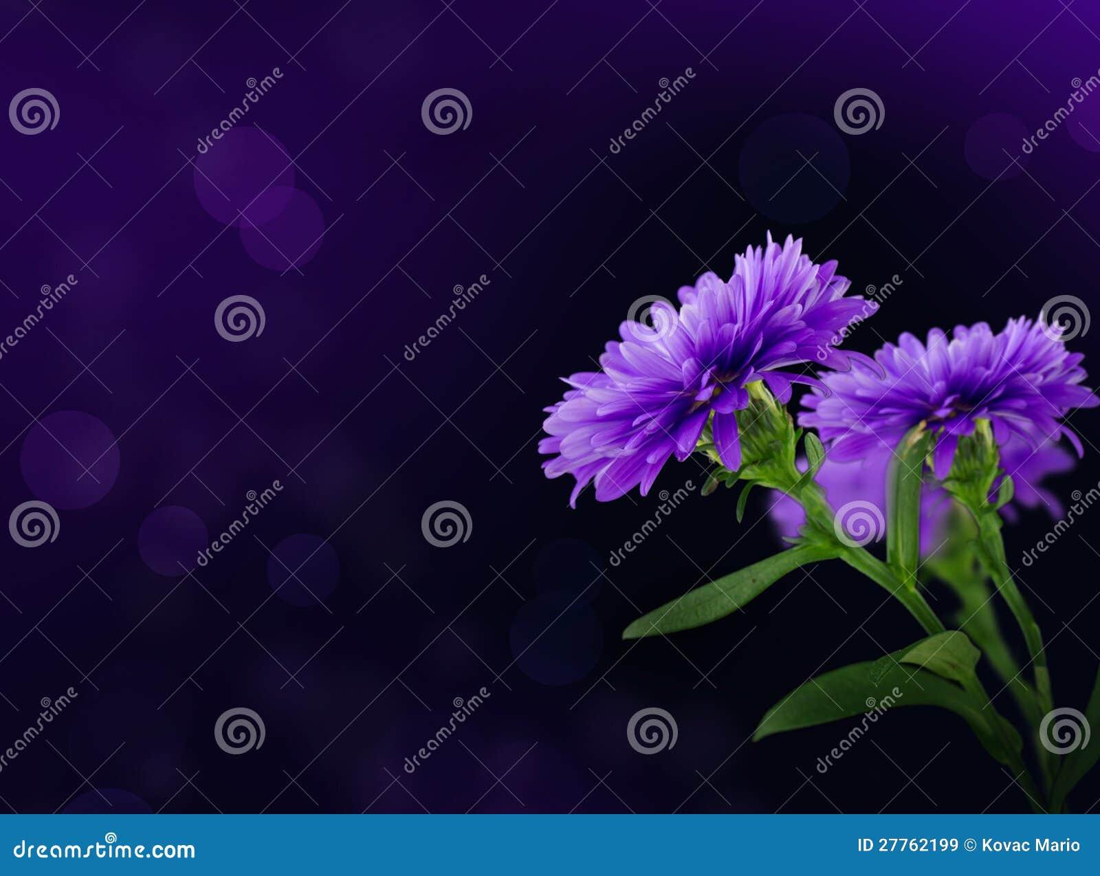Pourpre de fleur